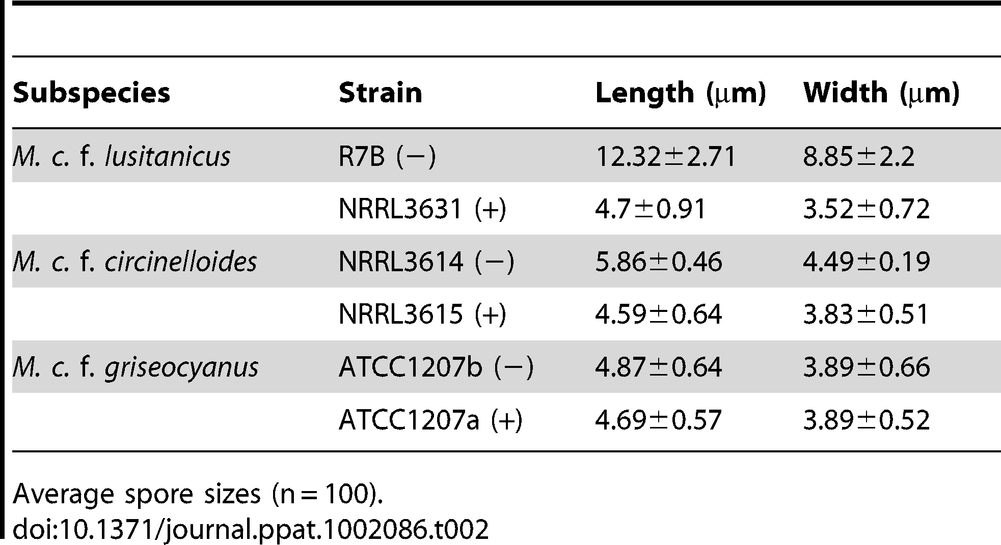<i>M. circinelloides</i> f. <i>lusitanicus</i> (−) isolates produce larger spores than (+) isolates and other subspecies.