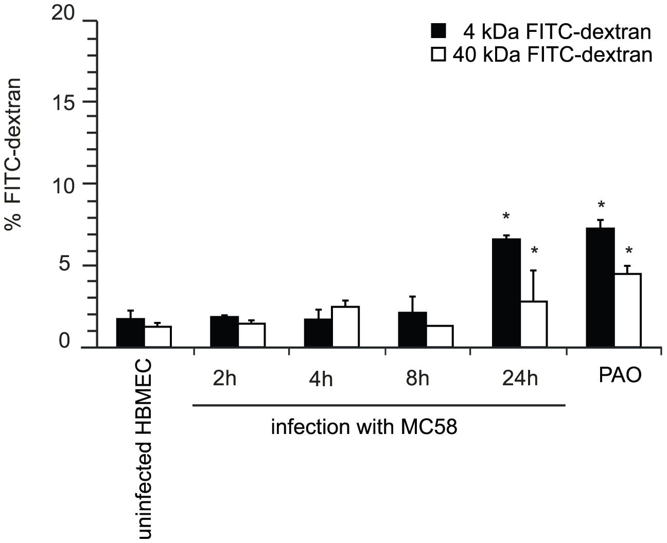 <i>N. meningitidis</i> infection alters the paracellular permeability of HBMEC.