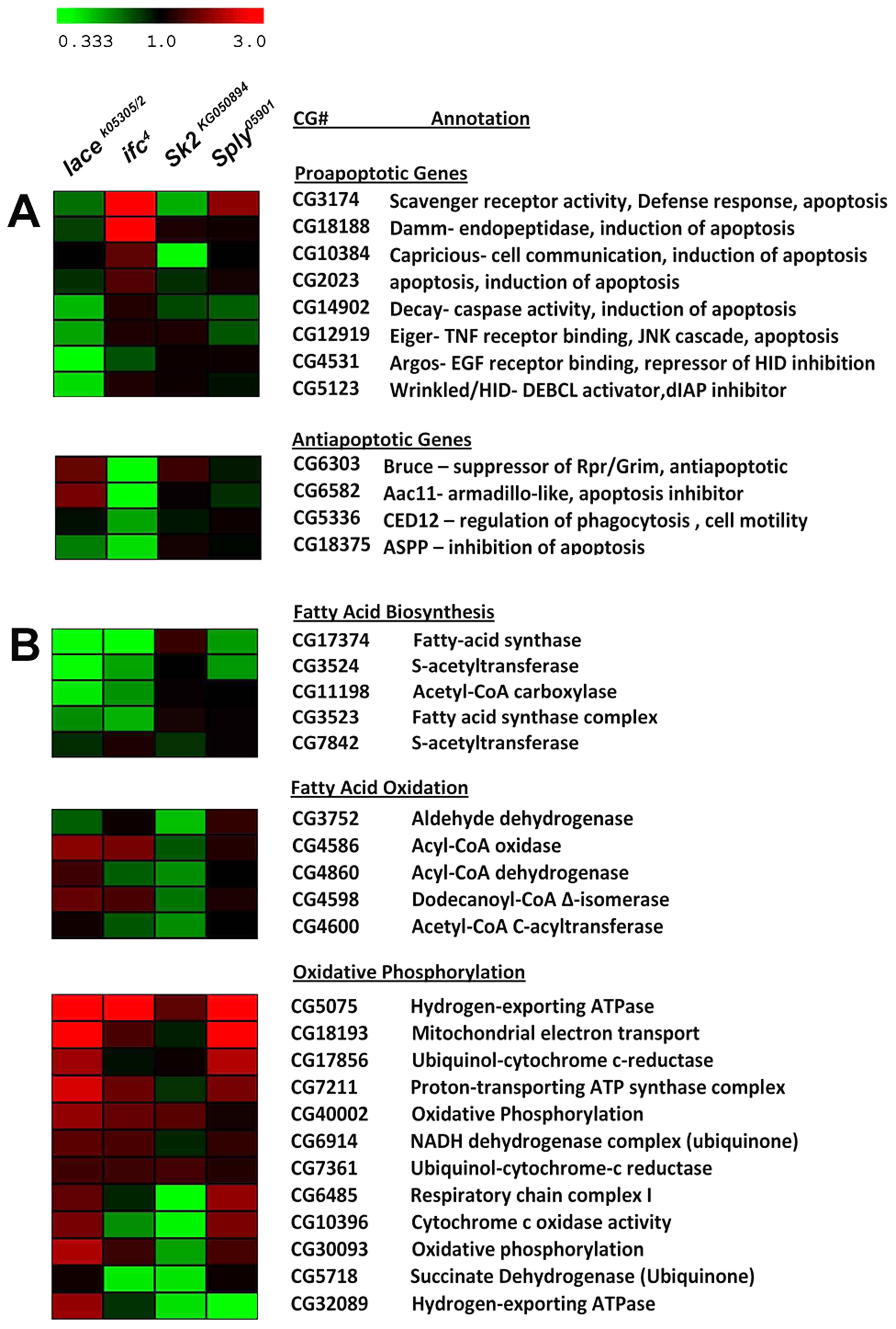 Differential expression of Lipid Metabolic and Apoptotic genes in SL mutants.