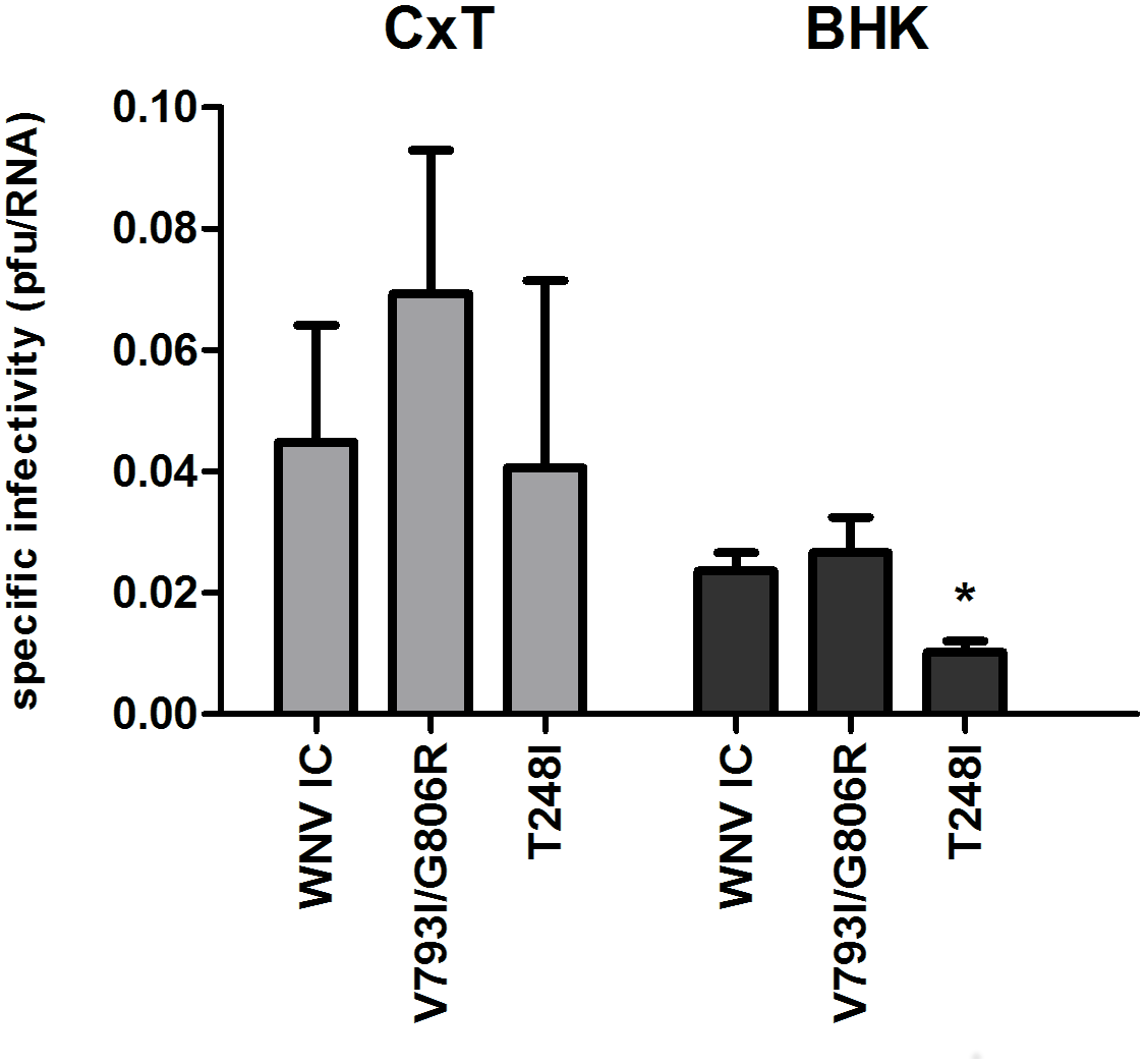Specific infectivity of WNV replication complex mutants.