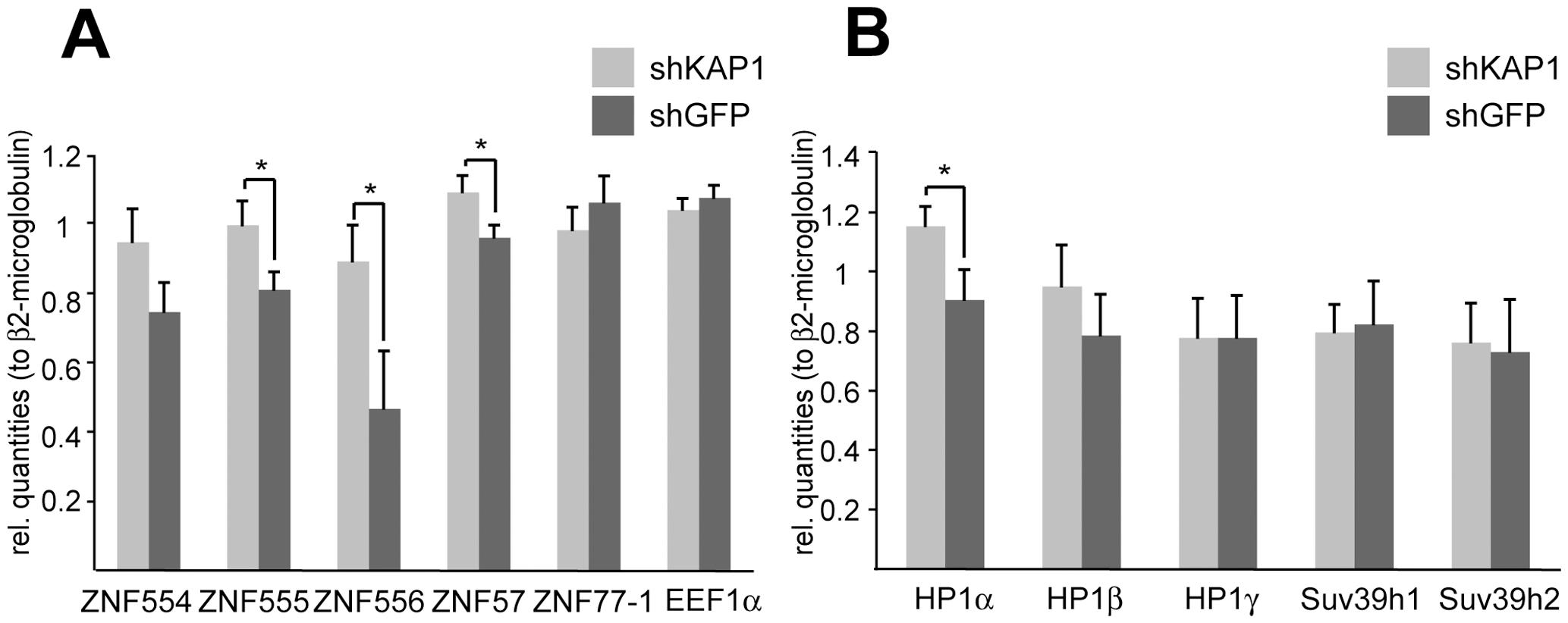 KAP1 mediates transcriptional repression of KRAB–ZFPs.