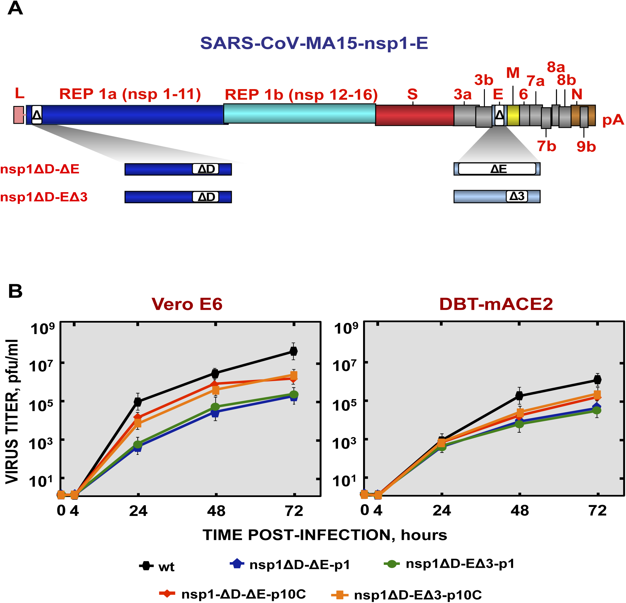 Generation and growth kinetics of SARS-CoV mutants with deletions in both nsp1 and E genes.