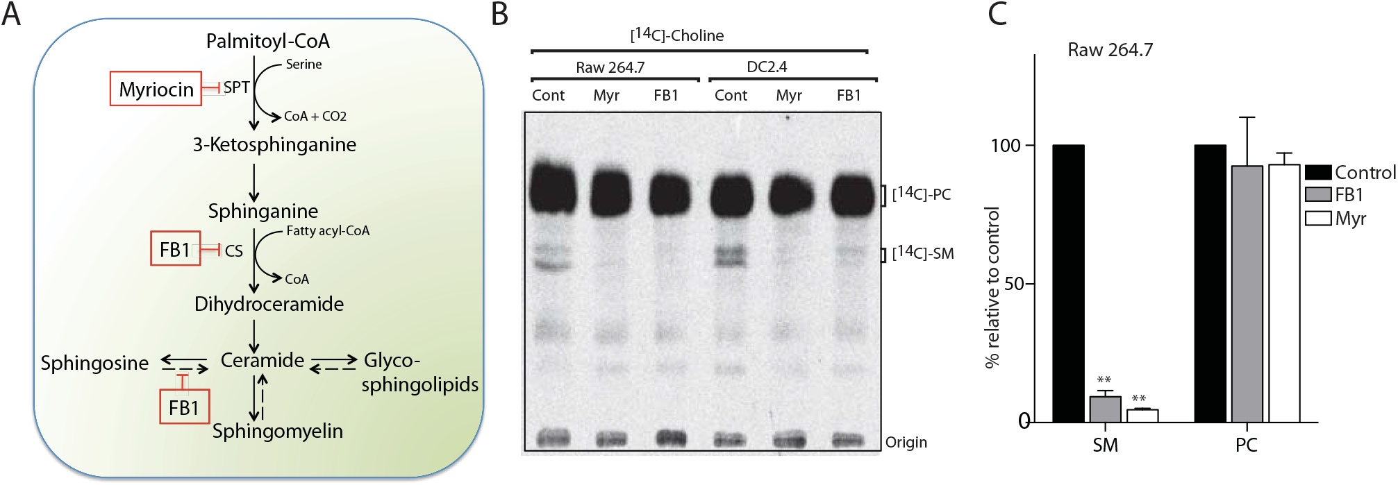 Myriocin and Fumonisin B1 block sphingolipid biosynthesis in RAW macrophages and dendritic cell lines.