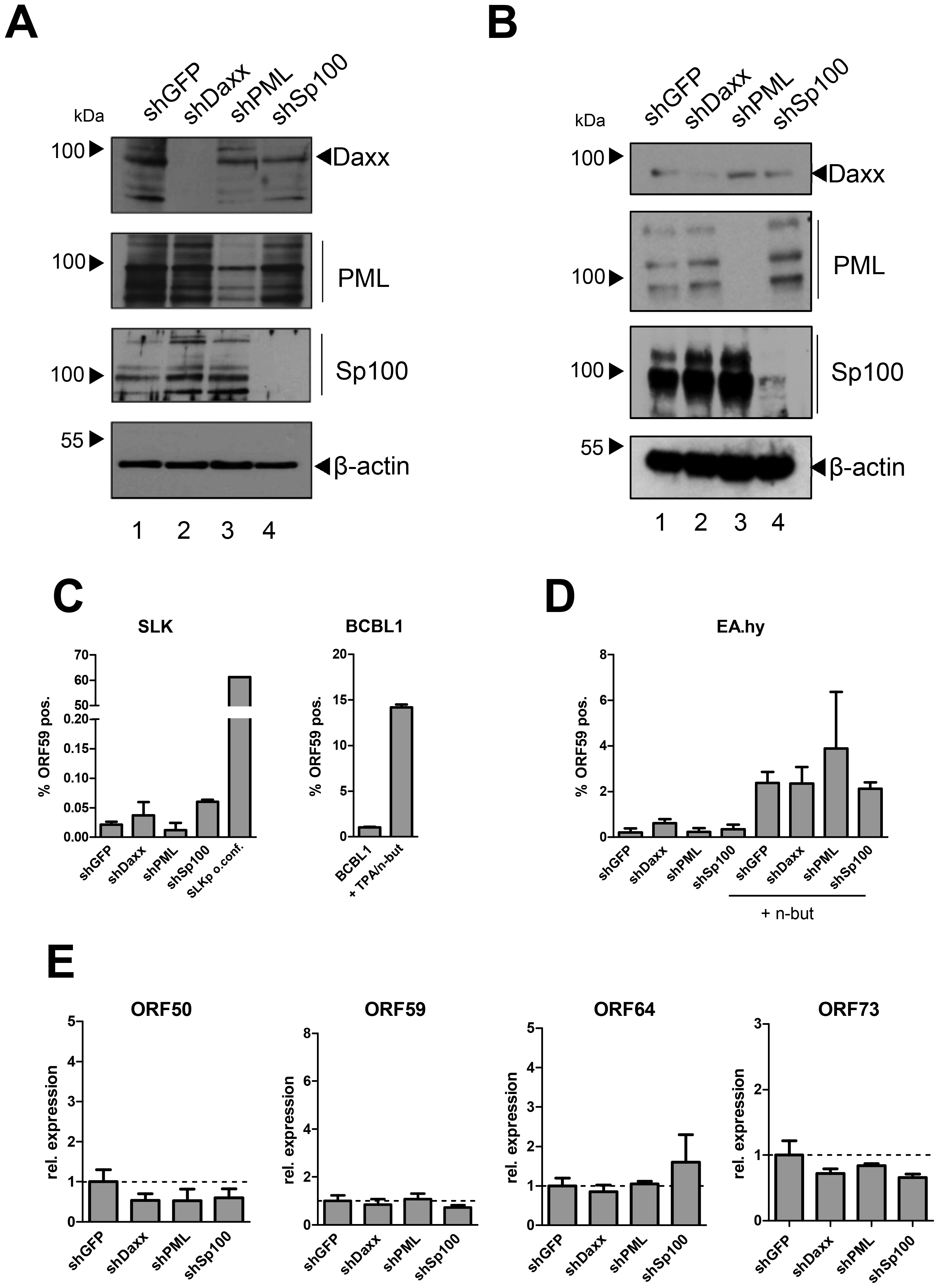 Depletion of ND10 components does not interfere with latency establishment in SLK or EA.hy cells.