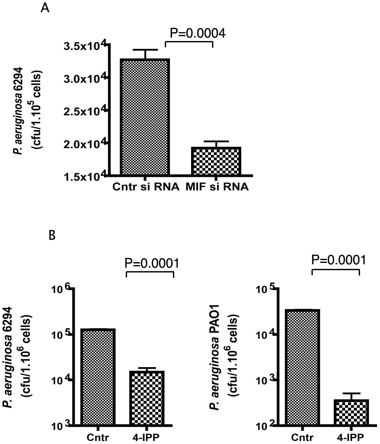 4-IPP inhibits <i>P. aeruginosa</i> invasion of corneal epithelial cells.