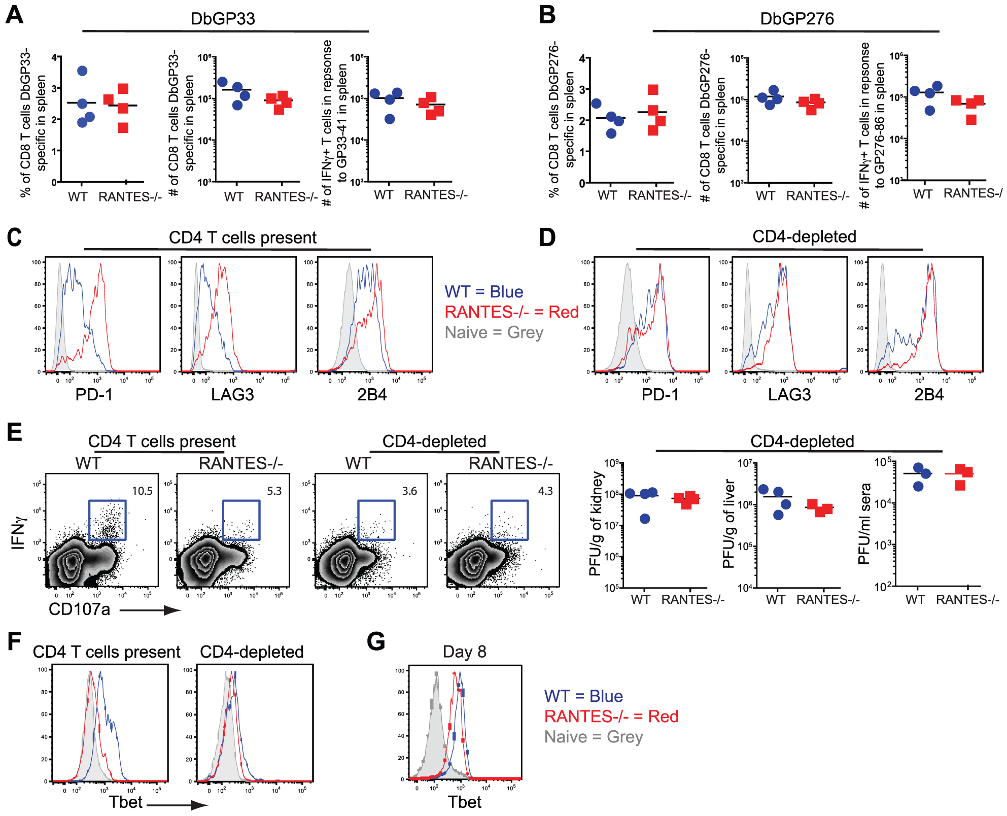 CD4-depletion reduces Tbet and IFNγ production in WT mice similar to levels seen in RANTES<sup>−/−</sup> mice.
