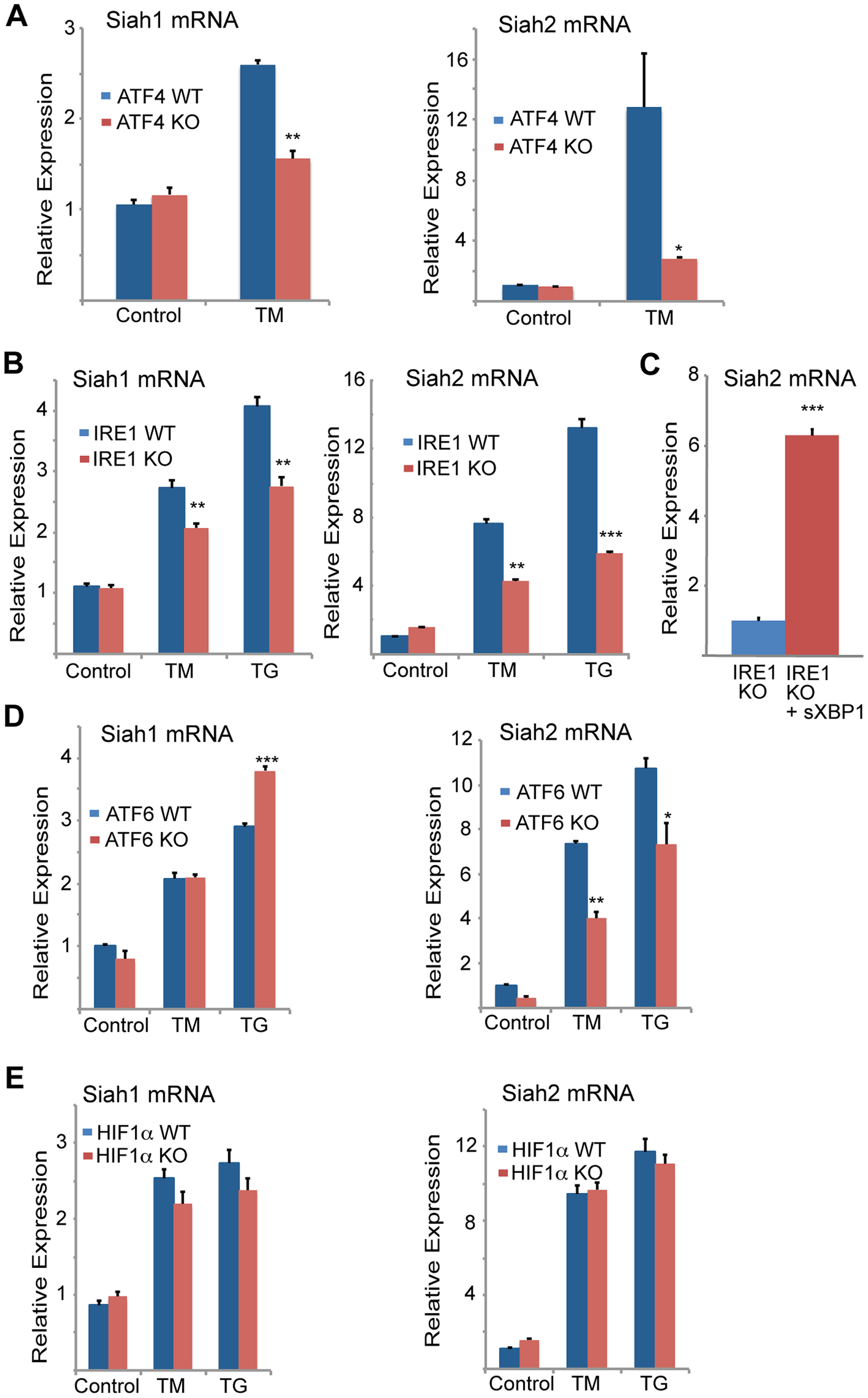 Siah1/2 transcription is induced by ATF4 and sXBP1 upon UPR.