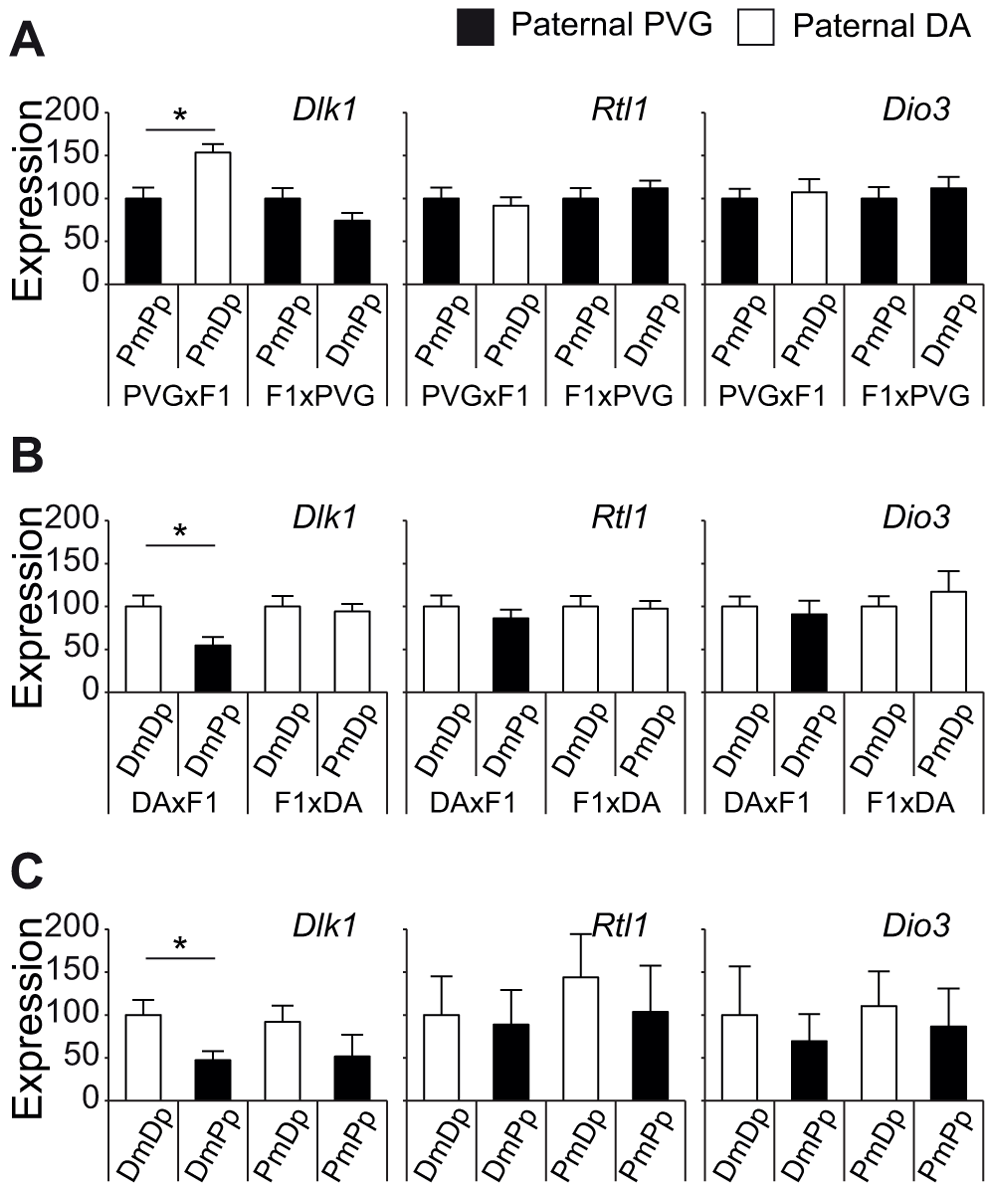 Paternally transmitted PVG allele at the Dlk1 locus predisposes for lower Dlk1 expression.
