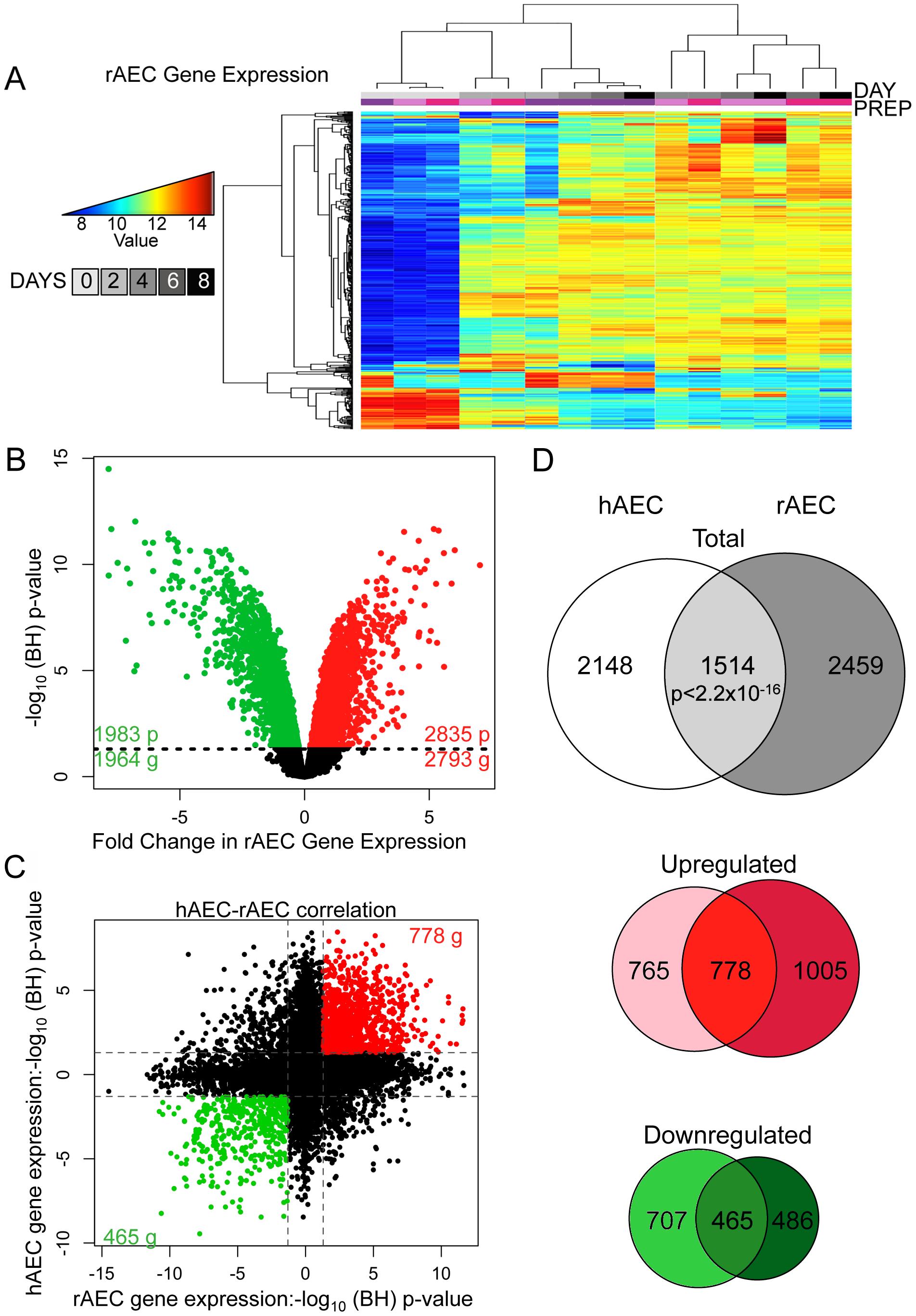 Comparative transcriptomic profiling of human and rat AEC differentiation.