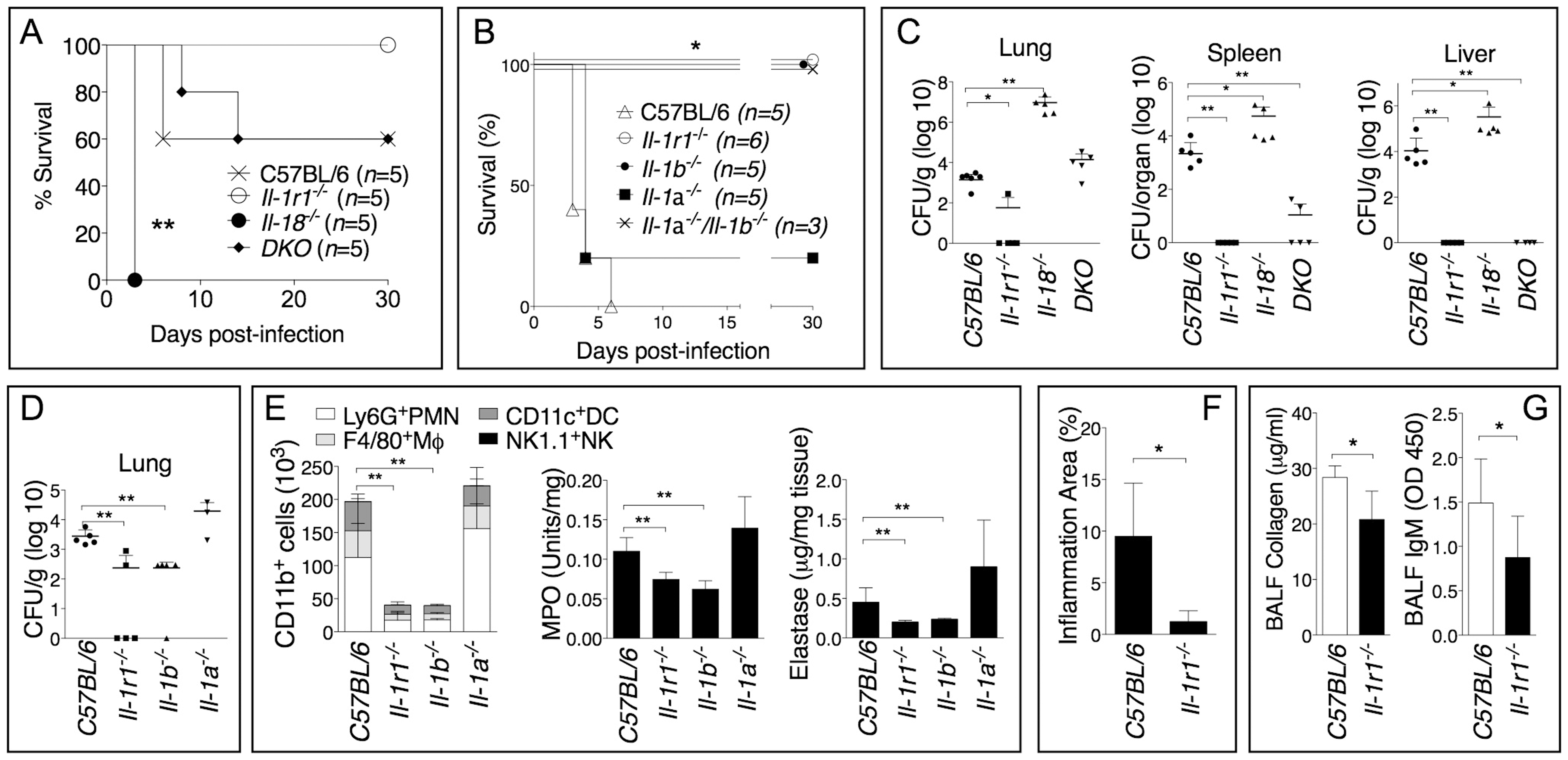 Deleterious role of IL-1β during infection with <i>B. thailandensis</i>.