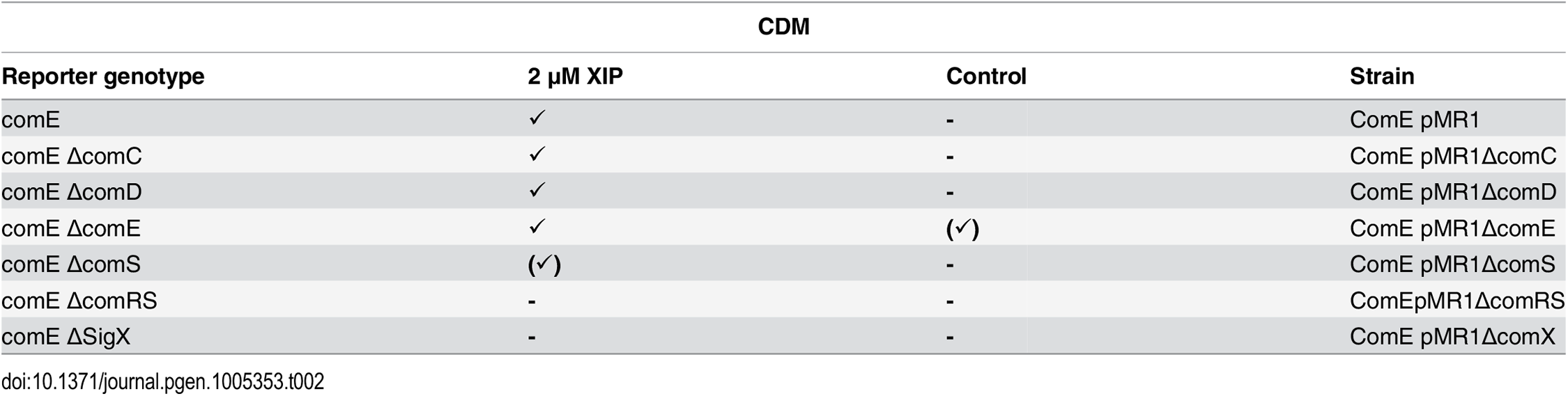 Expression of <i>comE</i> in different gene deletion background in CDM under XIP induced conditions.