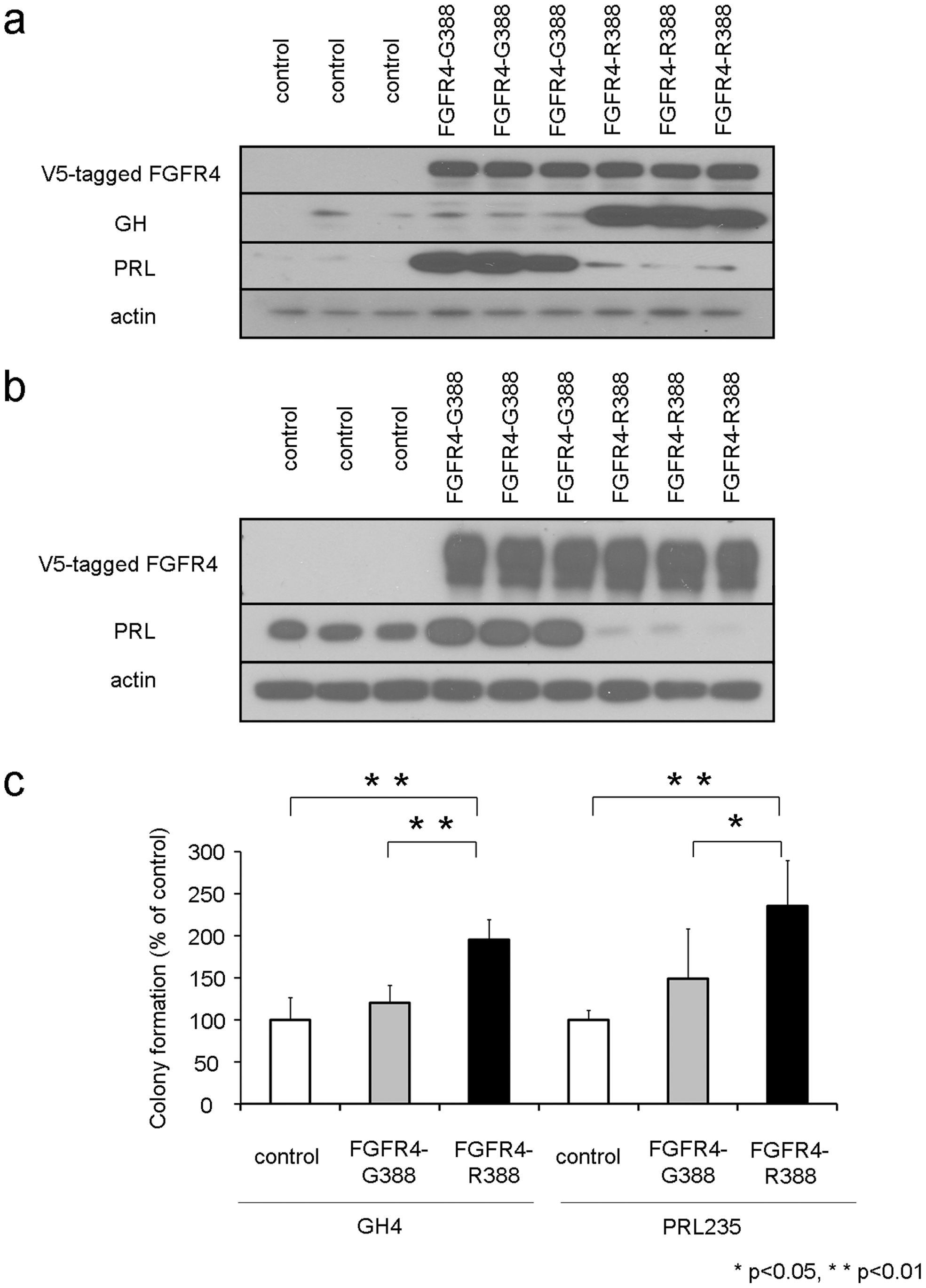 The FGFR4-R388 polymorphism deregulates pituitary hormone production and cell growth.