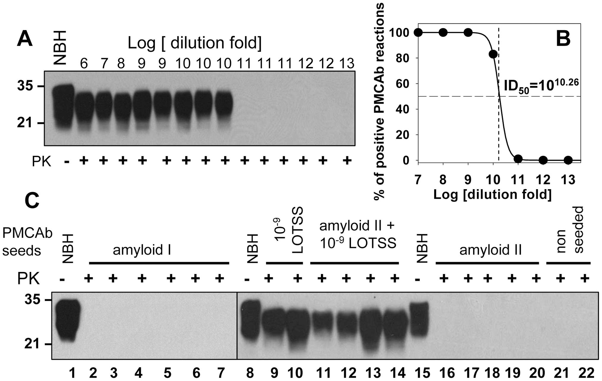 Preparations of rPrP fibrils have no detectible PrP<sup>Sc</sup>.