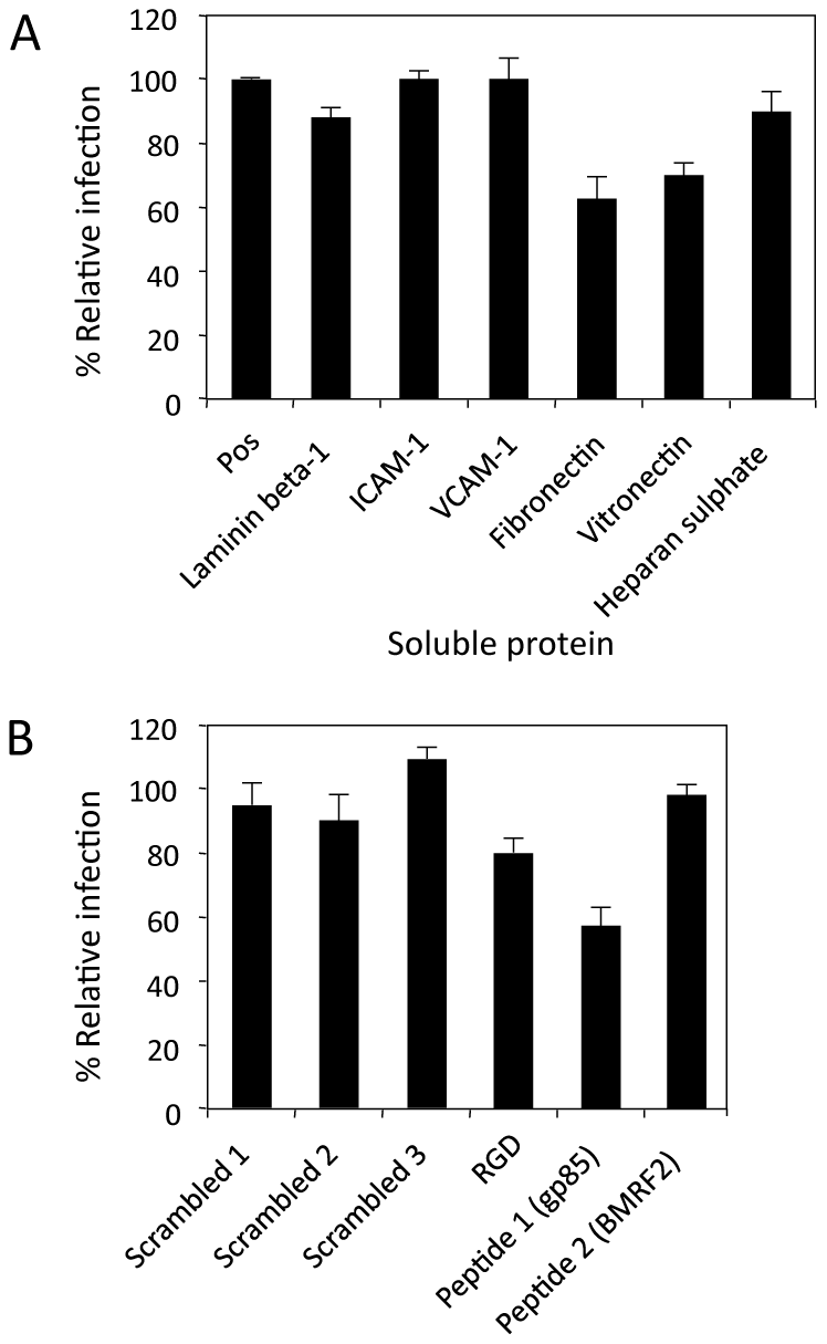 Inhibition of direct polarised epithelial cell infection.
