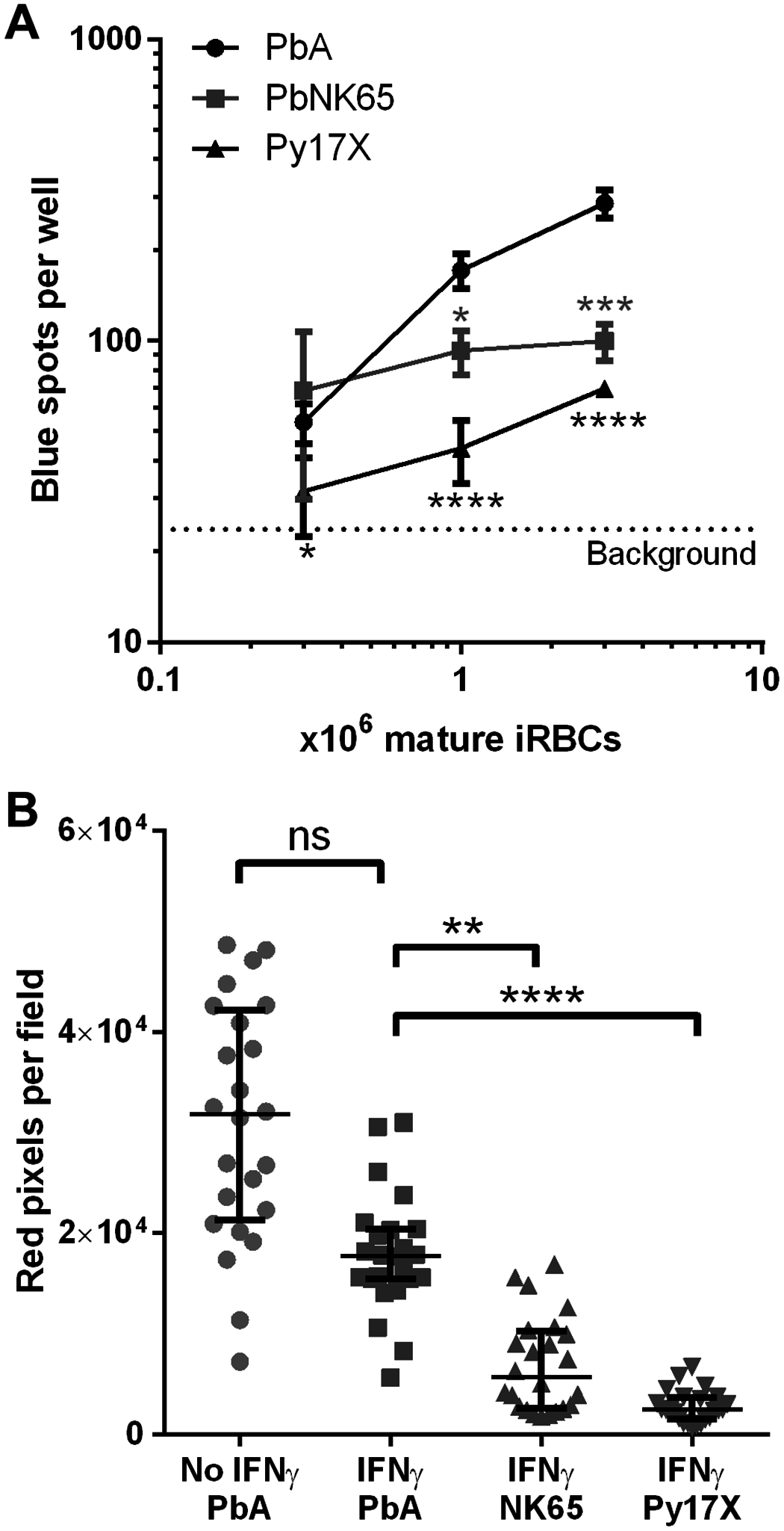 Uptake and cross-presentation efficiency of different rodent malaria parasites by MBECs <i>in vitro</i>.