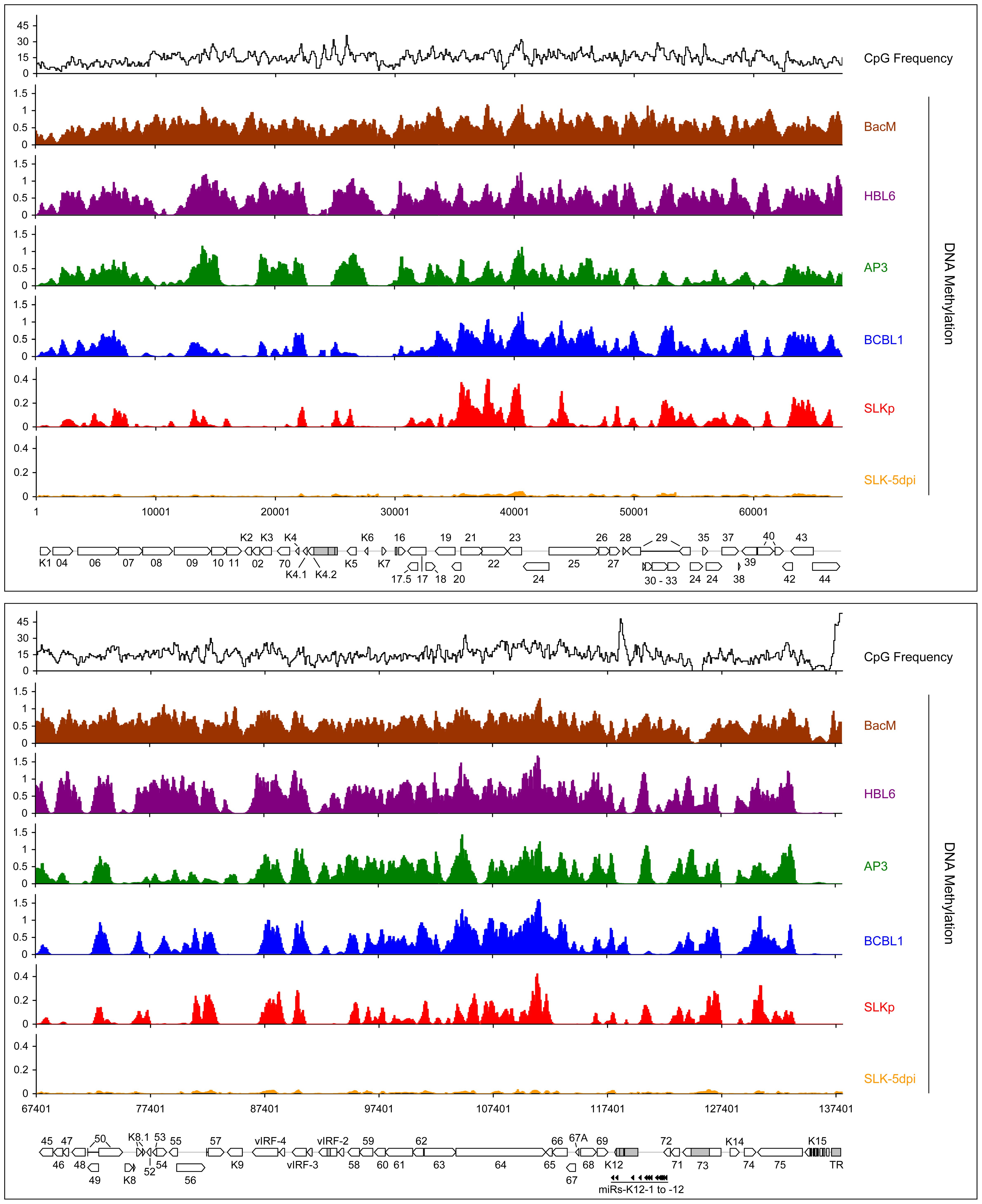 Global DNA methylation patterns of latent KSHV genomes.