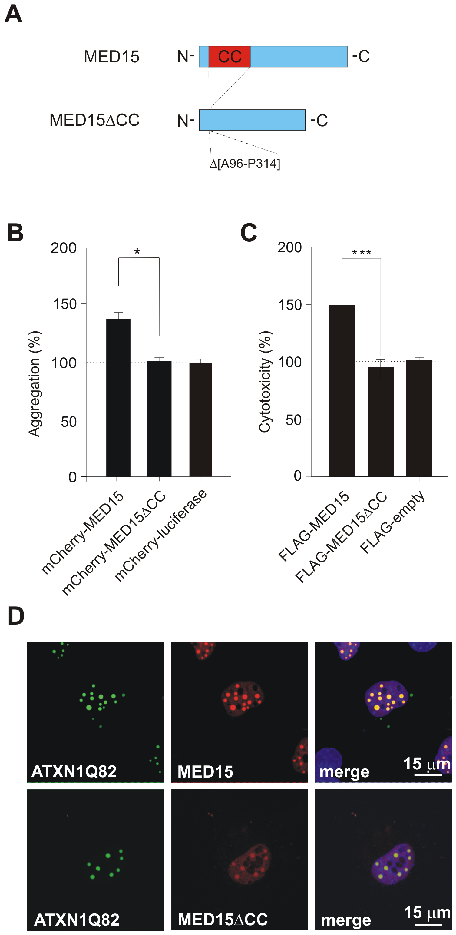 Effects of MED15ΔCC on mutant ATXN1 aggregation and cytotoxicity in cell-based assays.