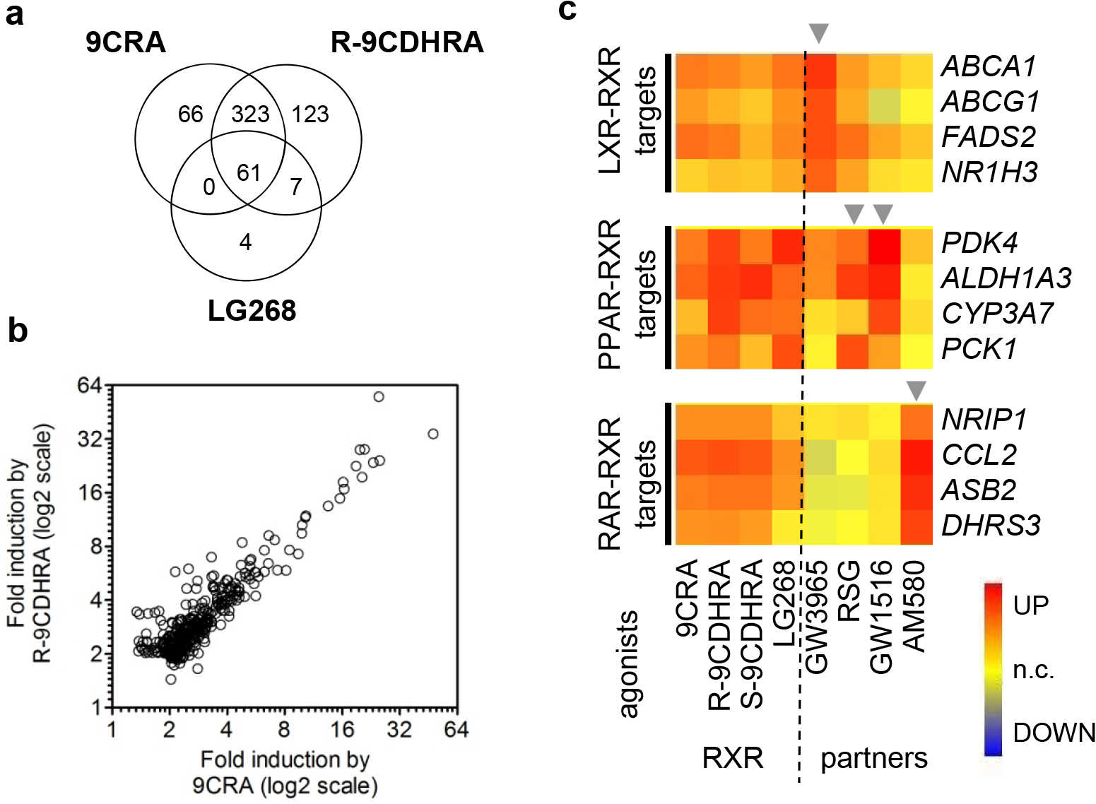 Molecular evidence for 9CDHRA selective activation of RXRs.