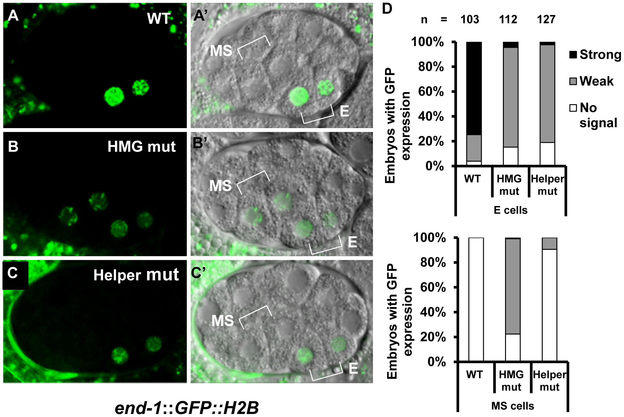 HMG and Helper sites contribute differentially to the regulation of <i>end-1</i> during early embryogenesis.