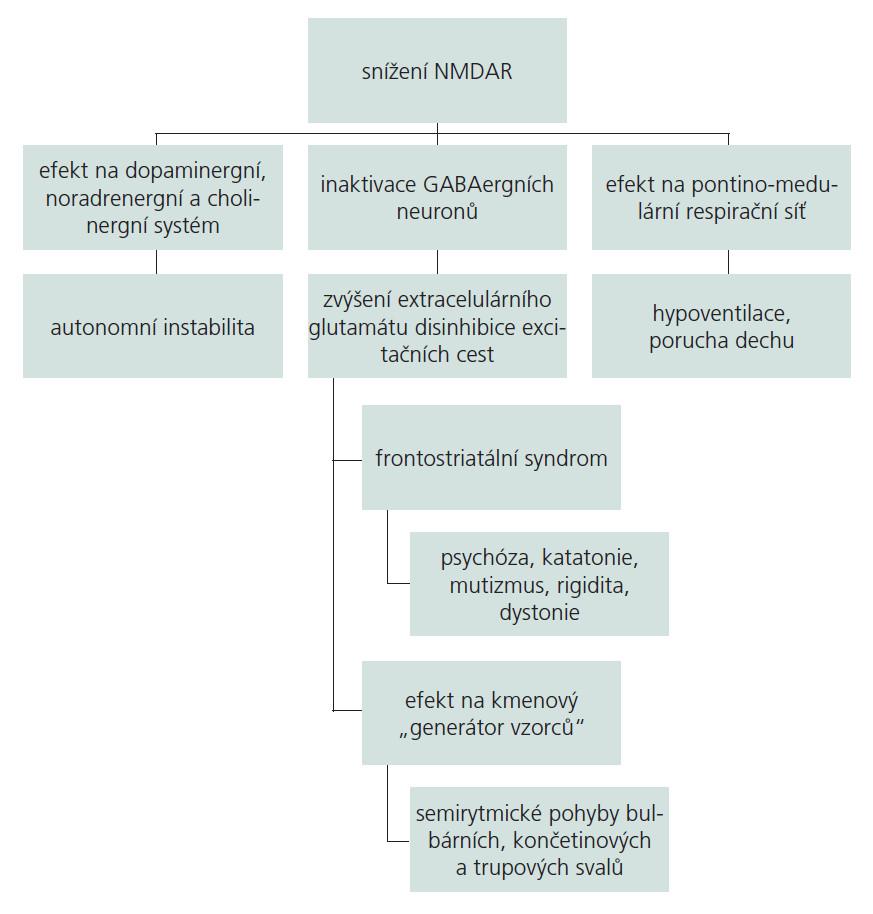 Schéma 1. Klinický korelát snížení a-NMDAR, převzato z [3].  Široké zastoupení excitačních glutamátových iontových N-metyl-D-aspartát receptorů (NMDAR) v centrálním nervovém systému vysvětluje pestrost a závažnost klinických projevů onemocnění. Schéma je založeno na poznání u zvířecích modelů po farmakologickém či genetickém snížení NMDAR. Protilátkami zprostředkovaný pokles NMDAR přednostně inaktivuje GABAergní neurony, čímž dochází k desinhibici excitačních cest a zvýšení extracelulárního glutamátu. Ovlivnění dopaminergního, noradrenergního a cholinergního systému vysvětluje autonomní projevy (hypersalivaci, hypertenzi, hypertermii a srdeční arytmie). Přímé působení a-NMDAR protilátek na medulárně-pontinní jádro Kölliker-Fuse vede k hypoventilaci.