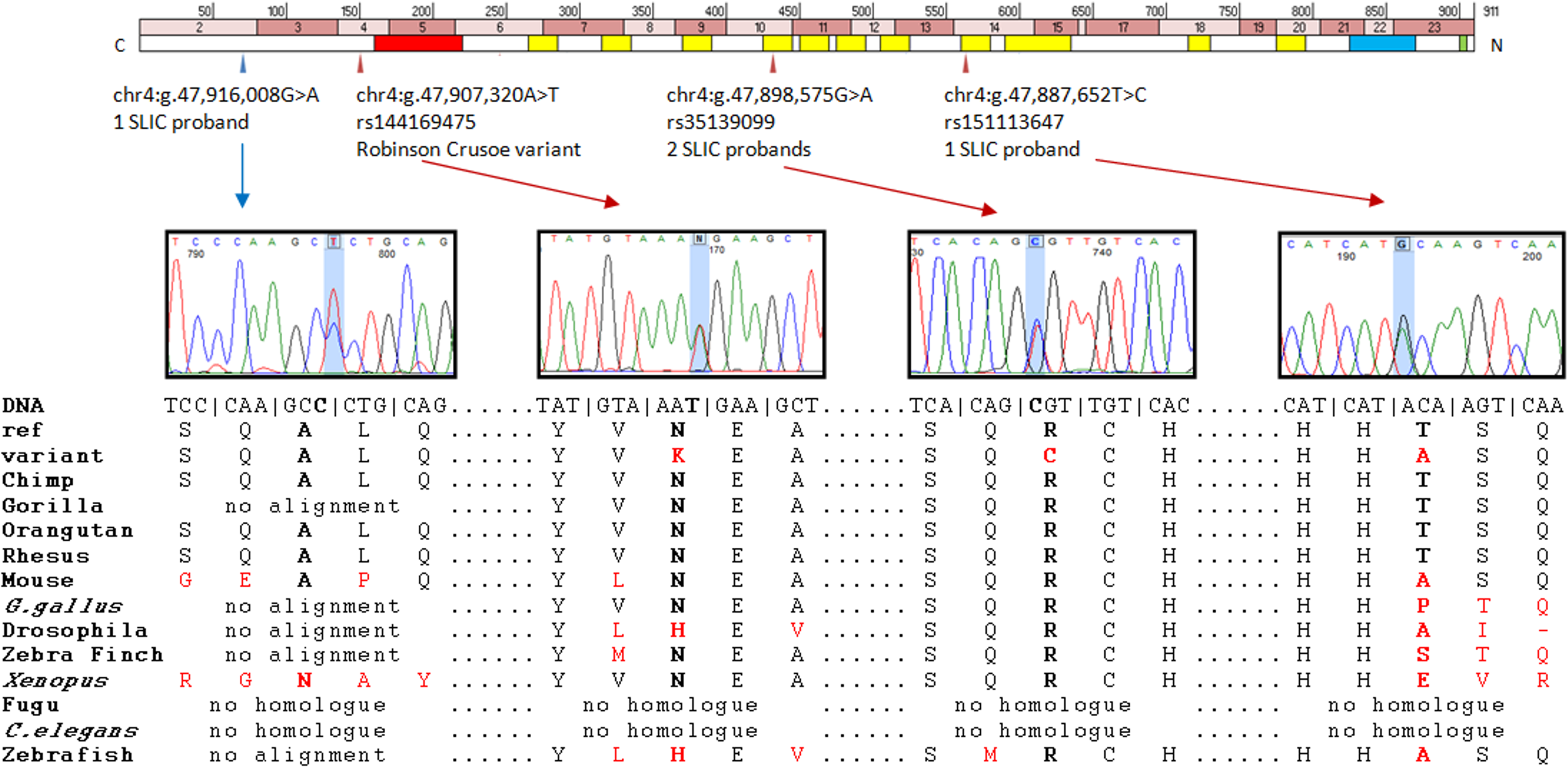 Putative contributory coding variants identified in <i>NFXL1</i> by this study.