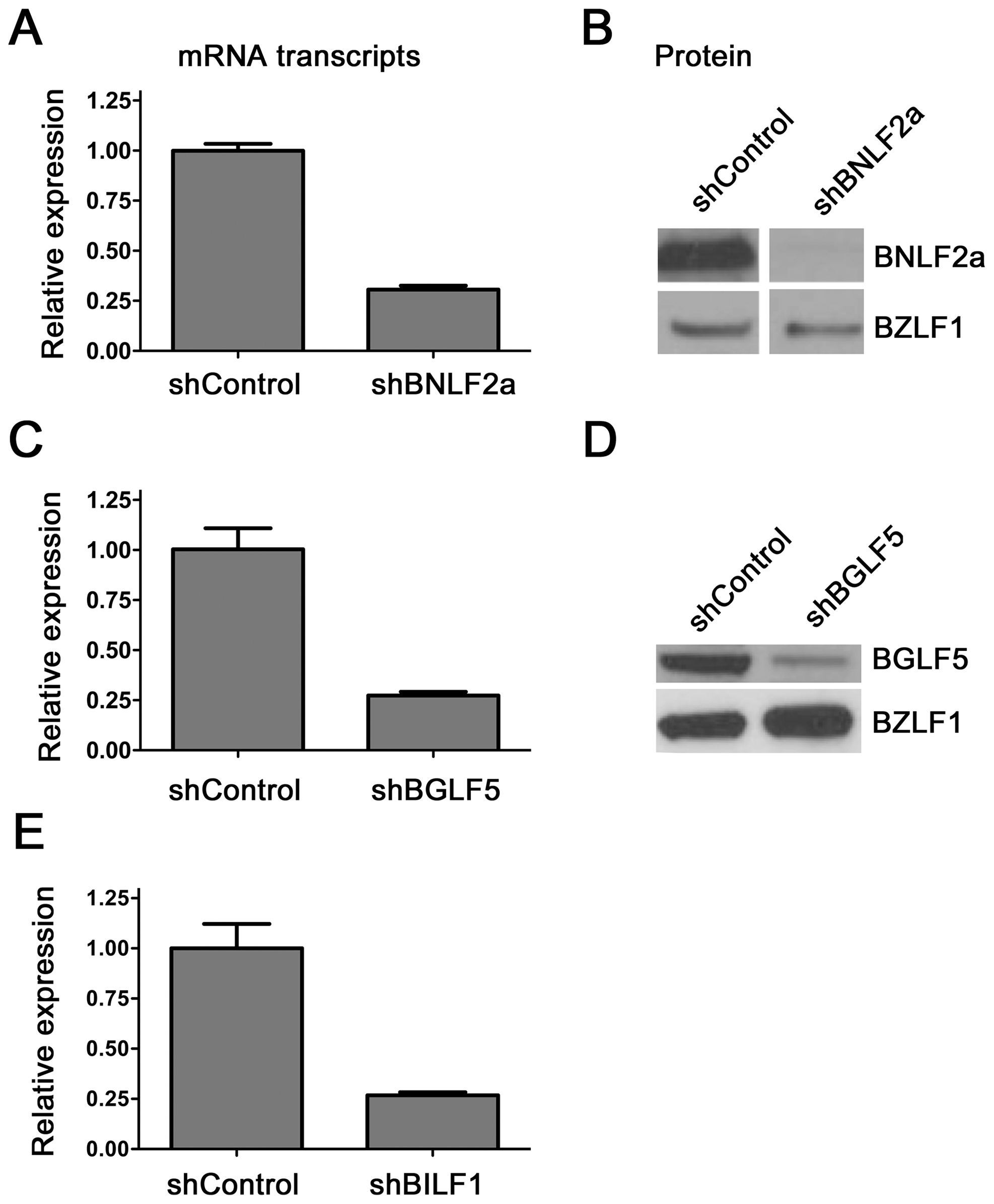 Knockdown of BNL2a, BILF1 and BGLF5 in transduced LCLs.