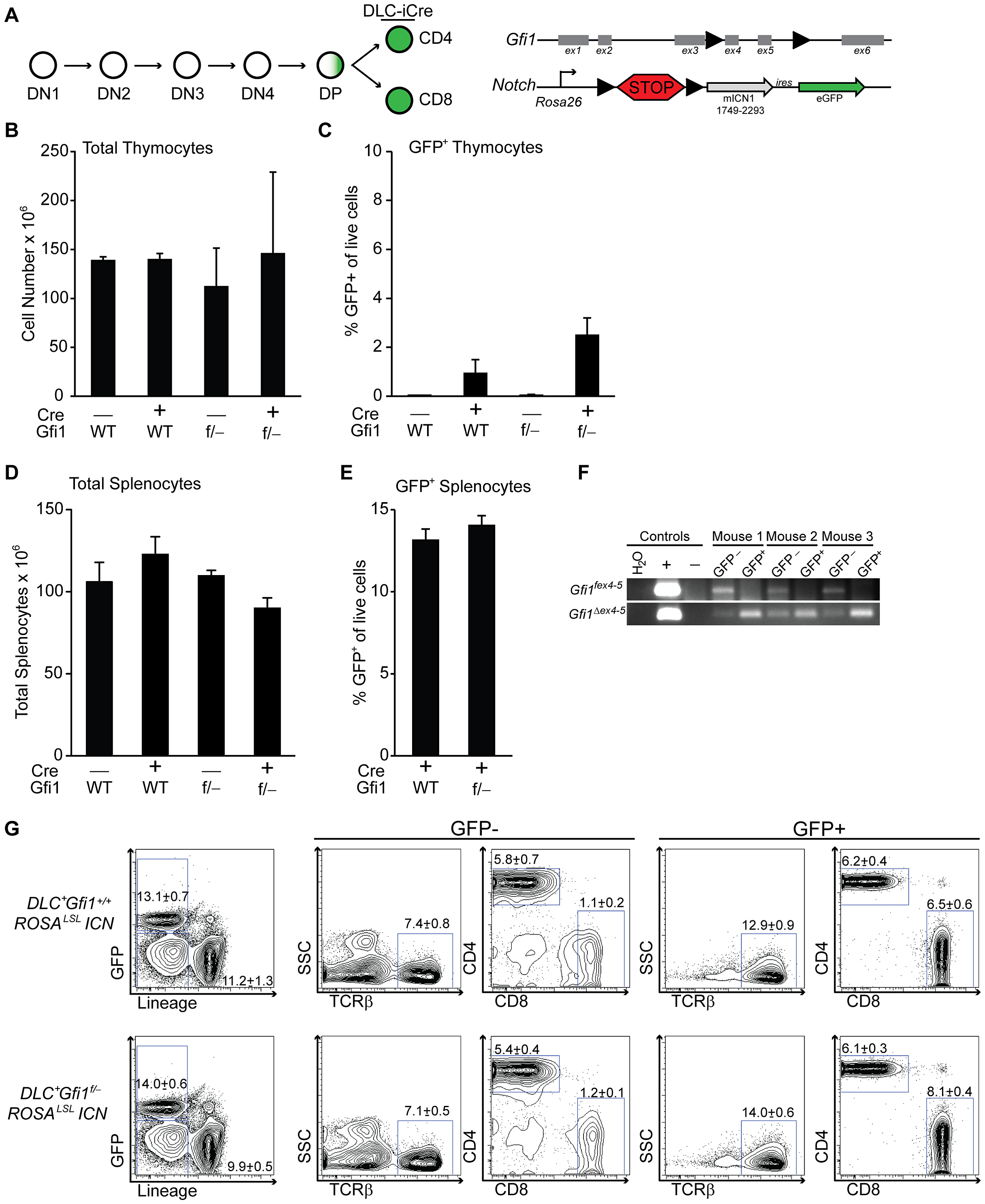 Peripheral T cells do not require Gfi1 for Notch activation.