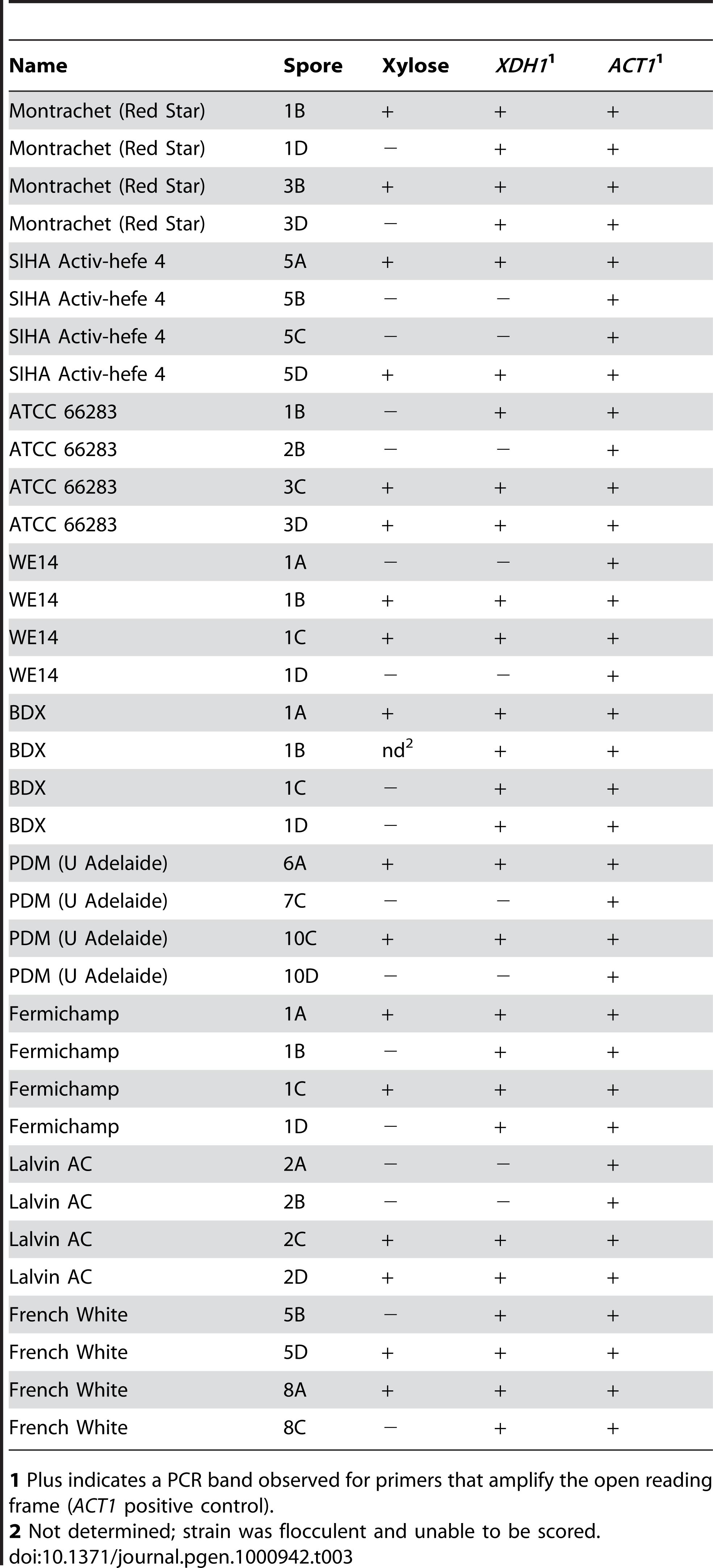 Presence of <i>XDH1</i> in xylose positive progeny.