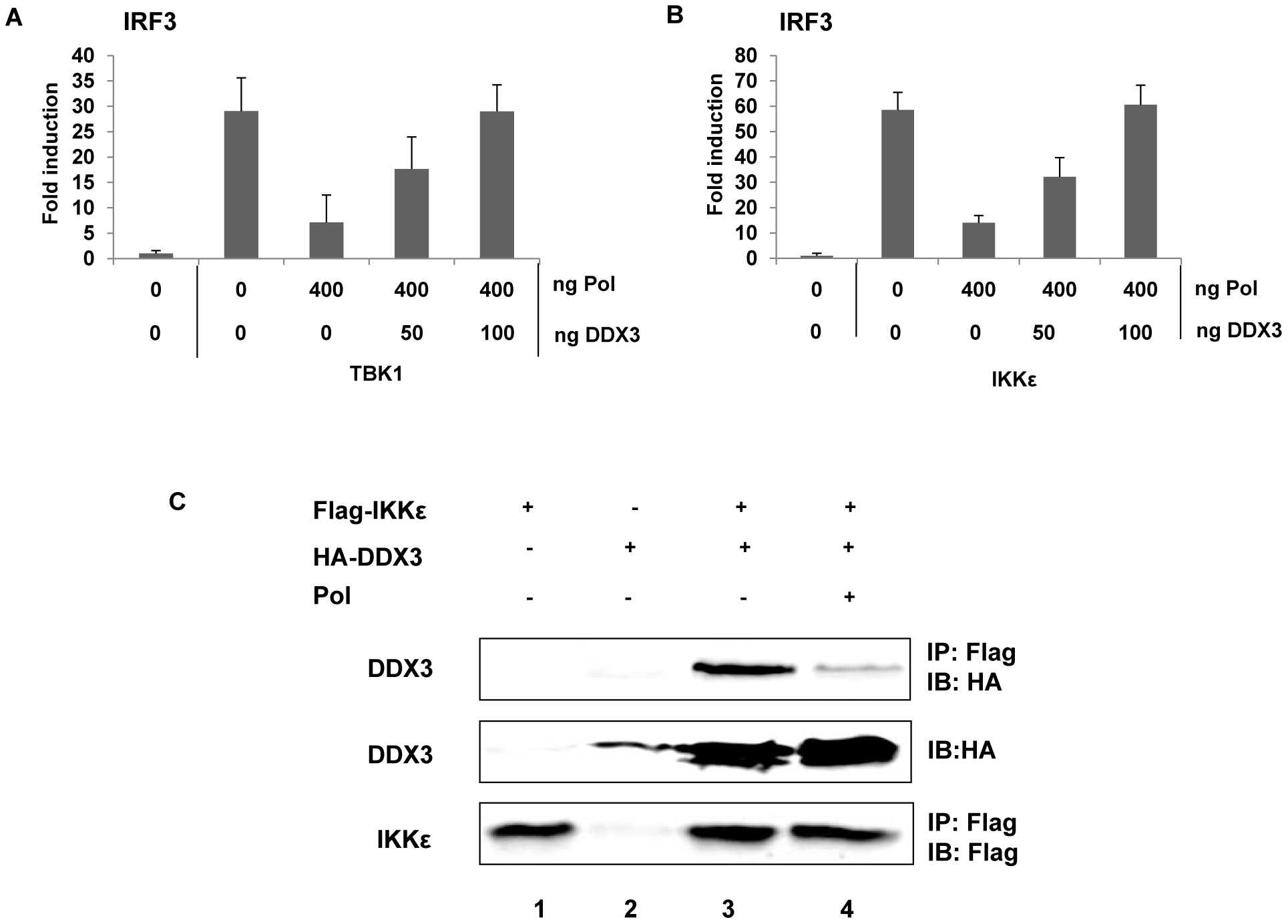 HBV Pol inhibits TBK1/IKKε via an interaction with DDX3.