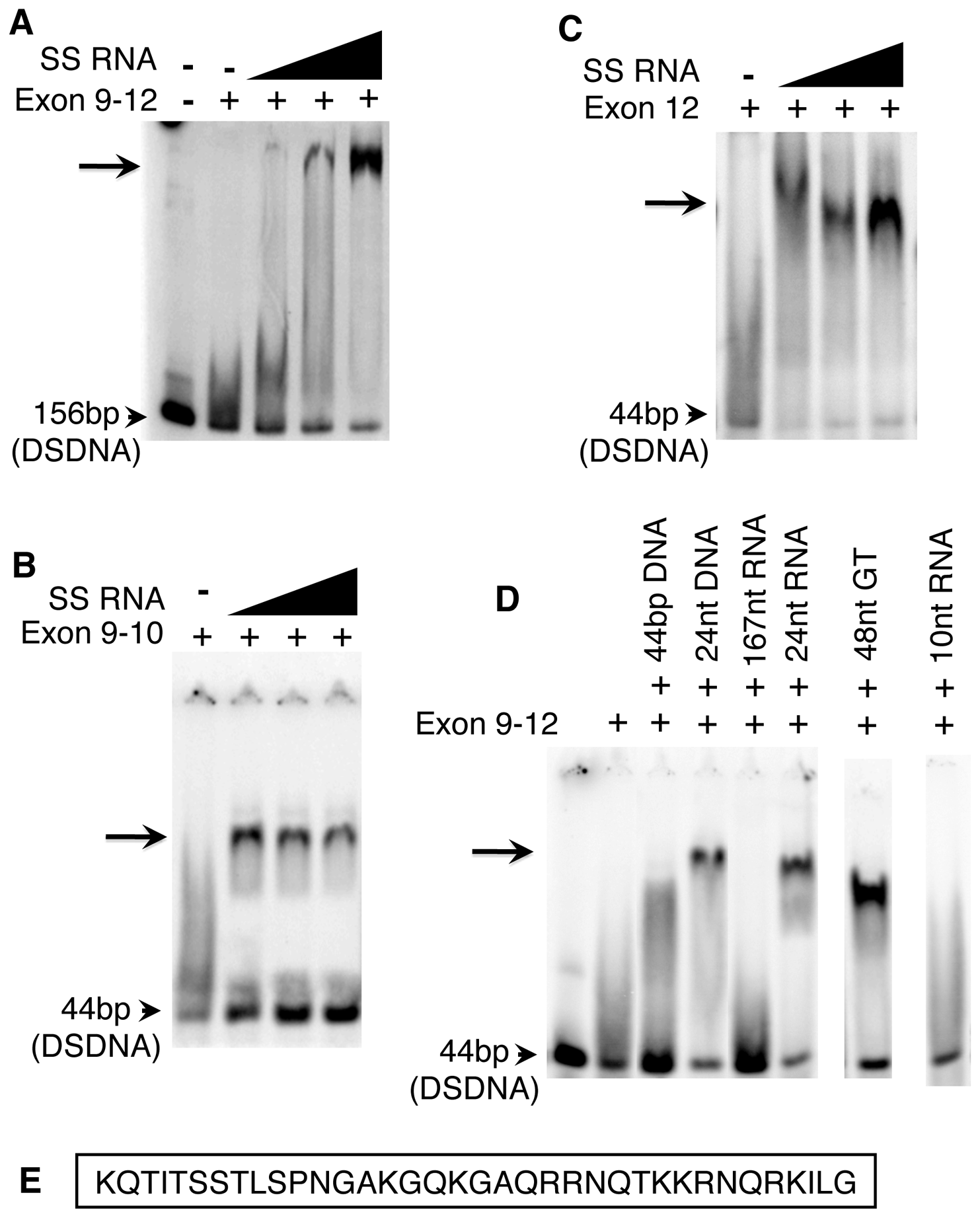 The purified Exon 9–12 domain requires RNA to bind DNA <i>in vitro</i>.