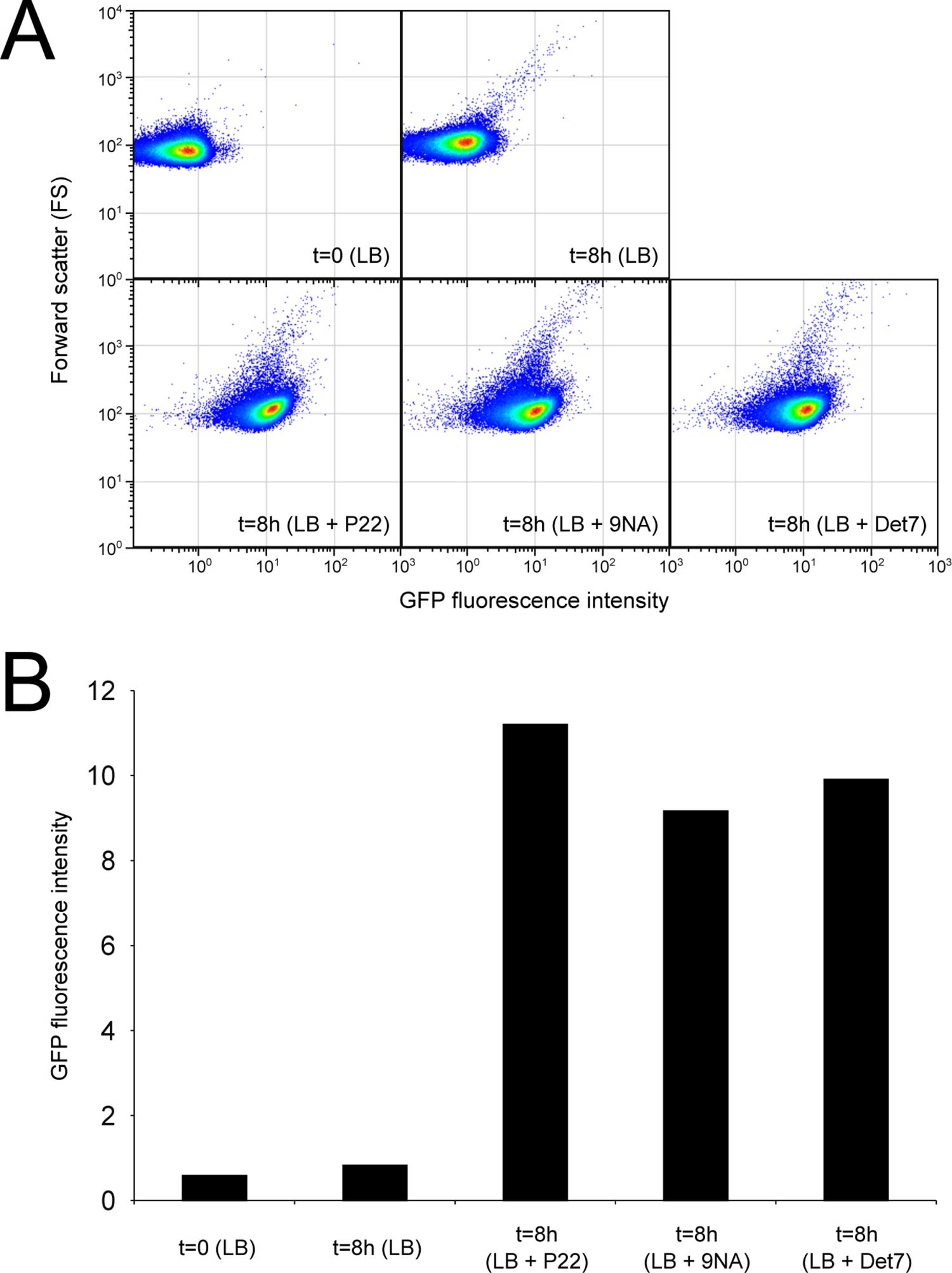 Flow cytometry analysis of <i>opvAB</i><sup>OFF</sup> and <i>opvAB</i><sup>ON</sup> subpopulations.