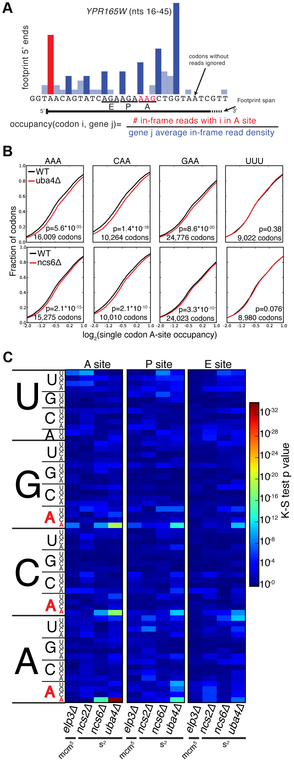 A single-codon occupancy metric shows that ribosome footprint accumulations at AAA, CAA, and GAA are statistically significant.