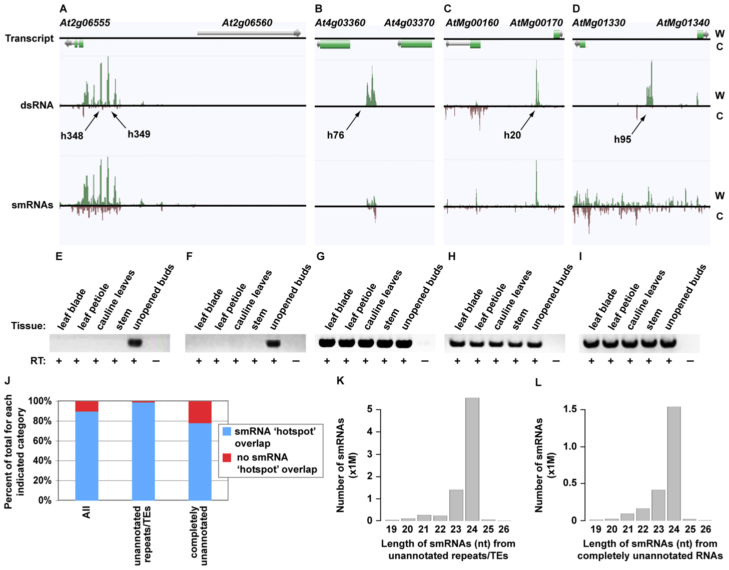 Identification of novel, highly structured RNAs using dsRNA–seq.