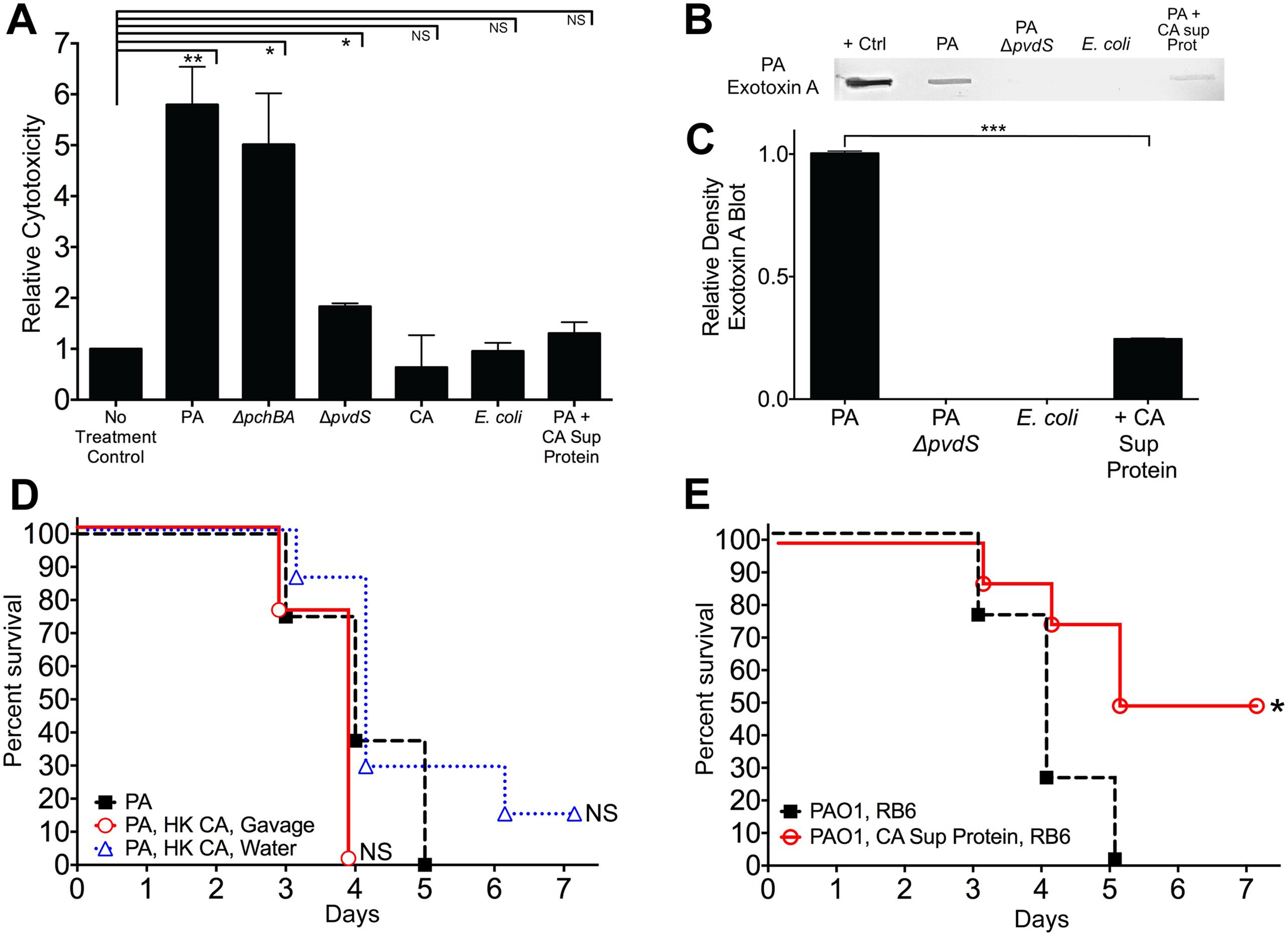 <i>C</i>. <i>albicans</i> secreted factors inhibit <i>P</i>. <i>aeruginosa</i> mediated cytotoxicity <i>in vitro</i>.