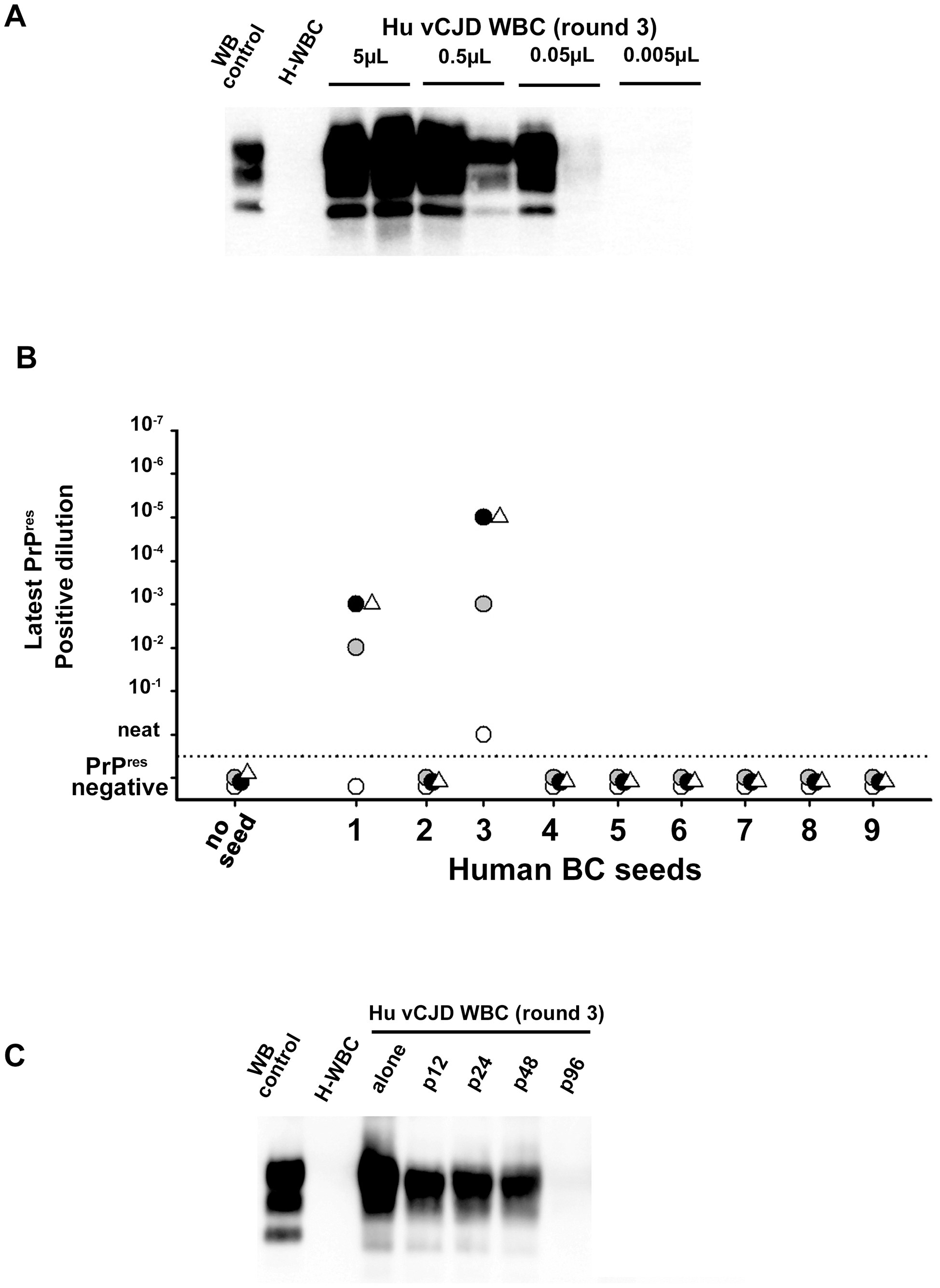 Analytical sensitivity of endogenous vCJD agent PMCA detection in the blood of affected patients.