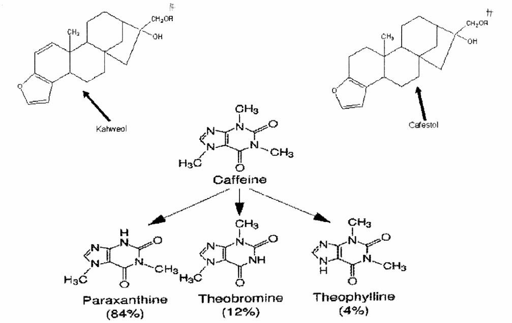 Struktura významných složek kávy – kofein a jeho metabolity a diterpeny považované za podporující dislipidémii (kafestol a kahweol)