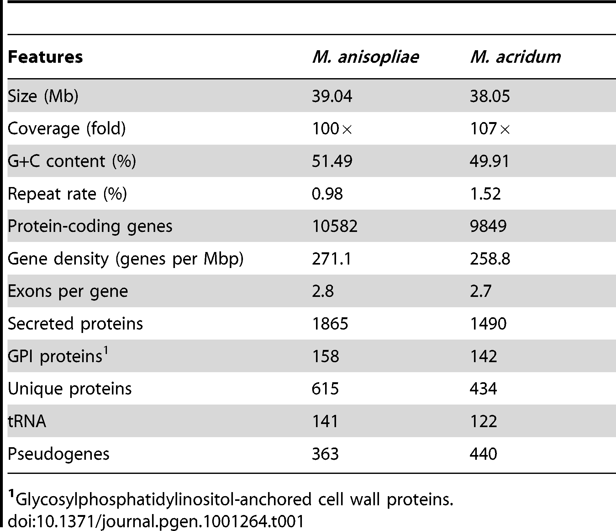 Main features of the <i>M. anisopliae</i> and <i>M. acridum</i> genomes.