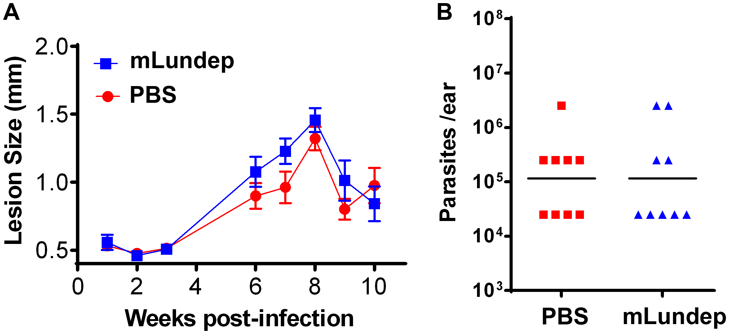 Mutation in the recombinant Lundep (rLundep) active site abrogates its virulence in a murine cutaneous leishmaniasis model.