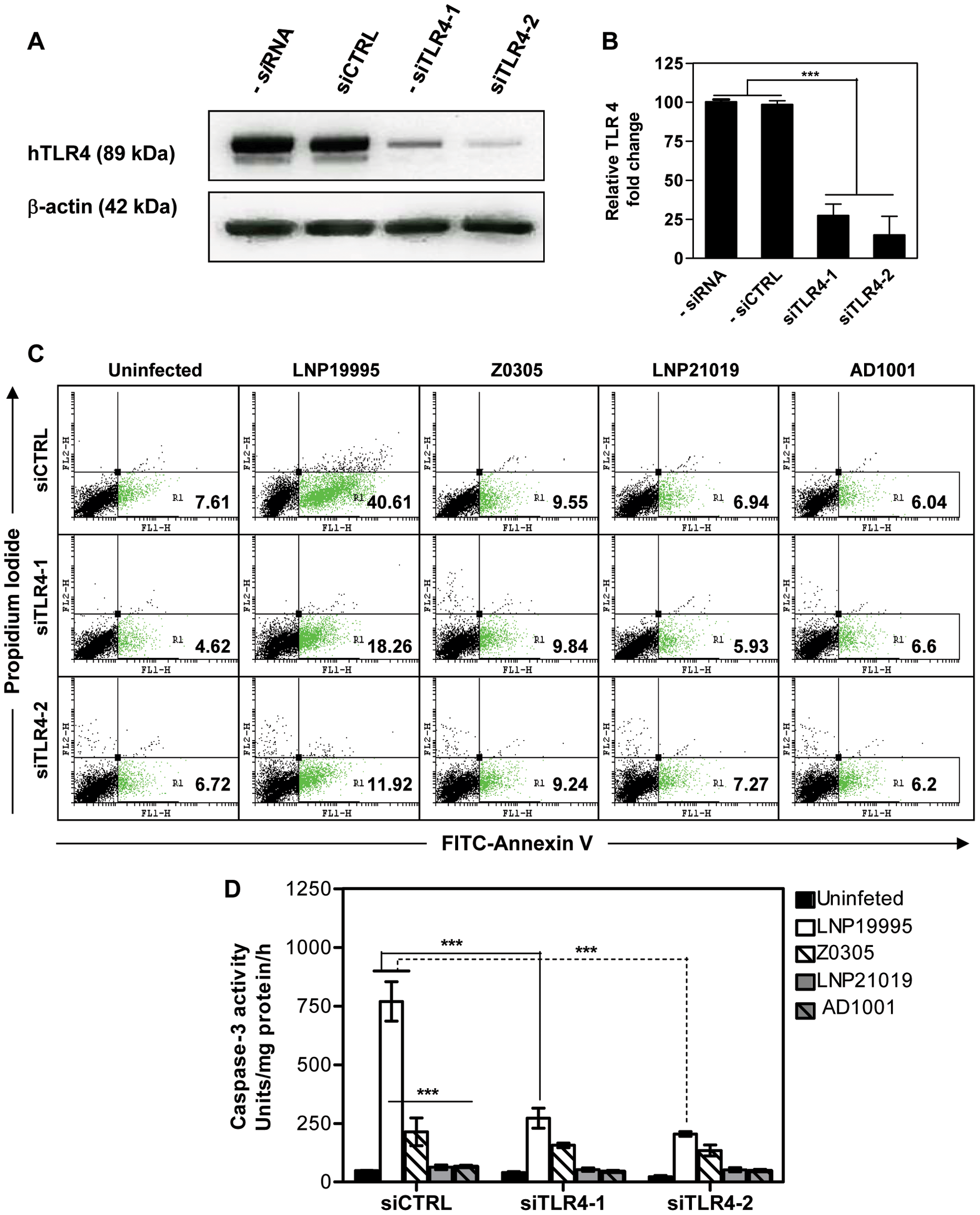 TLR4 depletion improves survival of cells infected with the ST-11 isolates.