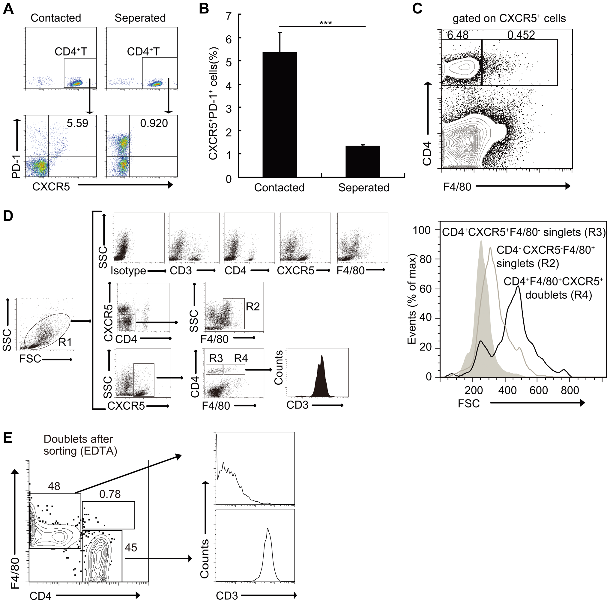 Macrophages drive Tfh cell development through a cell-cell contact-dependent mechanism.