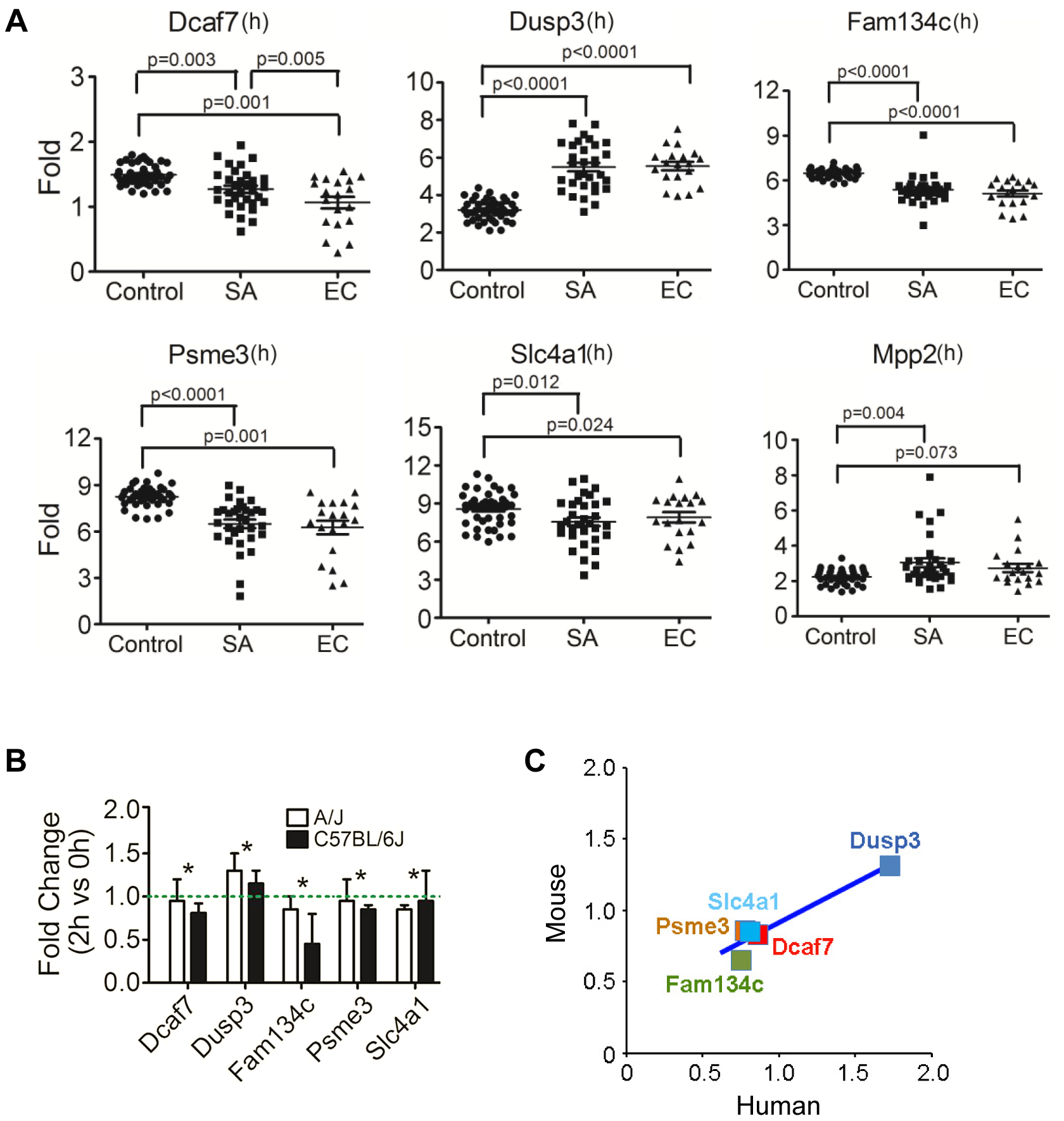 Human orthologues of six candidate genes were significantly differentially expressed between patients with <i>S. aureus</i> blood stream infection (BSI) and healthy subjects, and five of these genes (<i>Dcaf7</i>, <i>Dusp3</i>, <i>Fam134c</i>, <i>Psme3</i>, and <i>Slc4a1</i>) demonstrated consistent uninfected vs infected expression patterns between mouse and human.