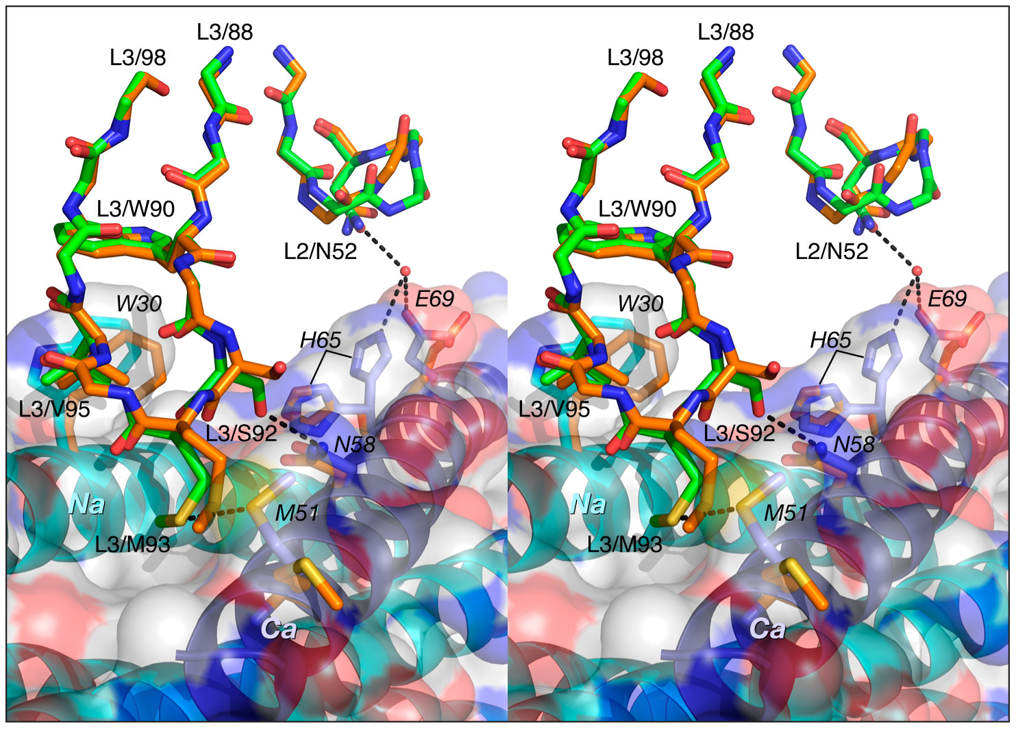 Comparison of the interactions of CDR-L2 of Fab 8066 and Fab 8062 with 5-Helix.