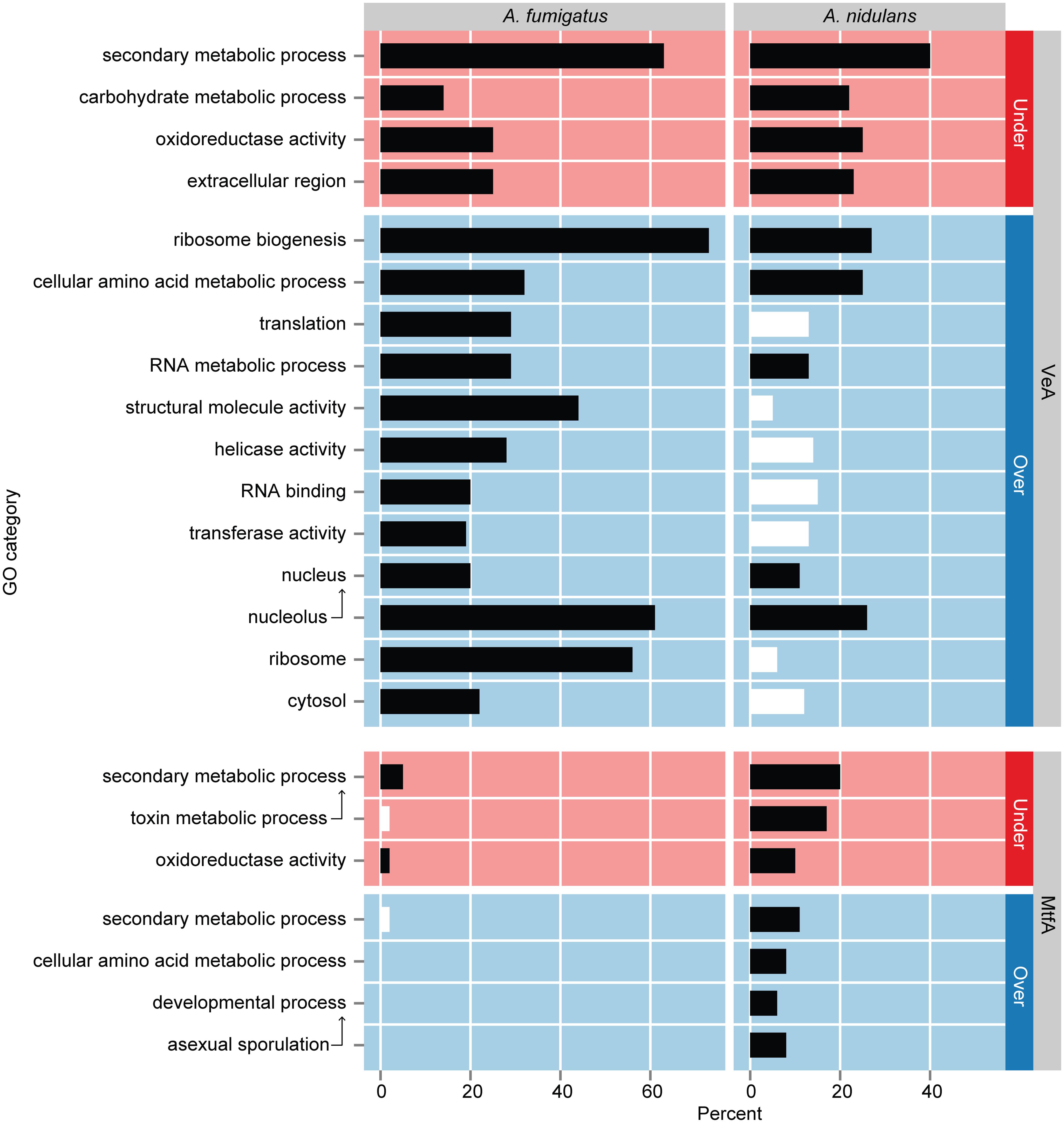 GO term enrichment analysis of genes differentially expressed in Δ<i>veA</i> and Δ<i>mtfA</i> relative to wild type in <i>A</i>. <i>fumigatus</i> and <i>A</i>. <i>nidulans</i>.