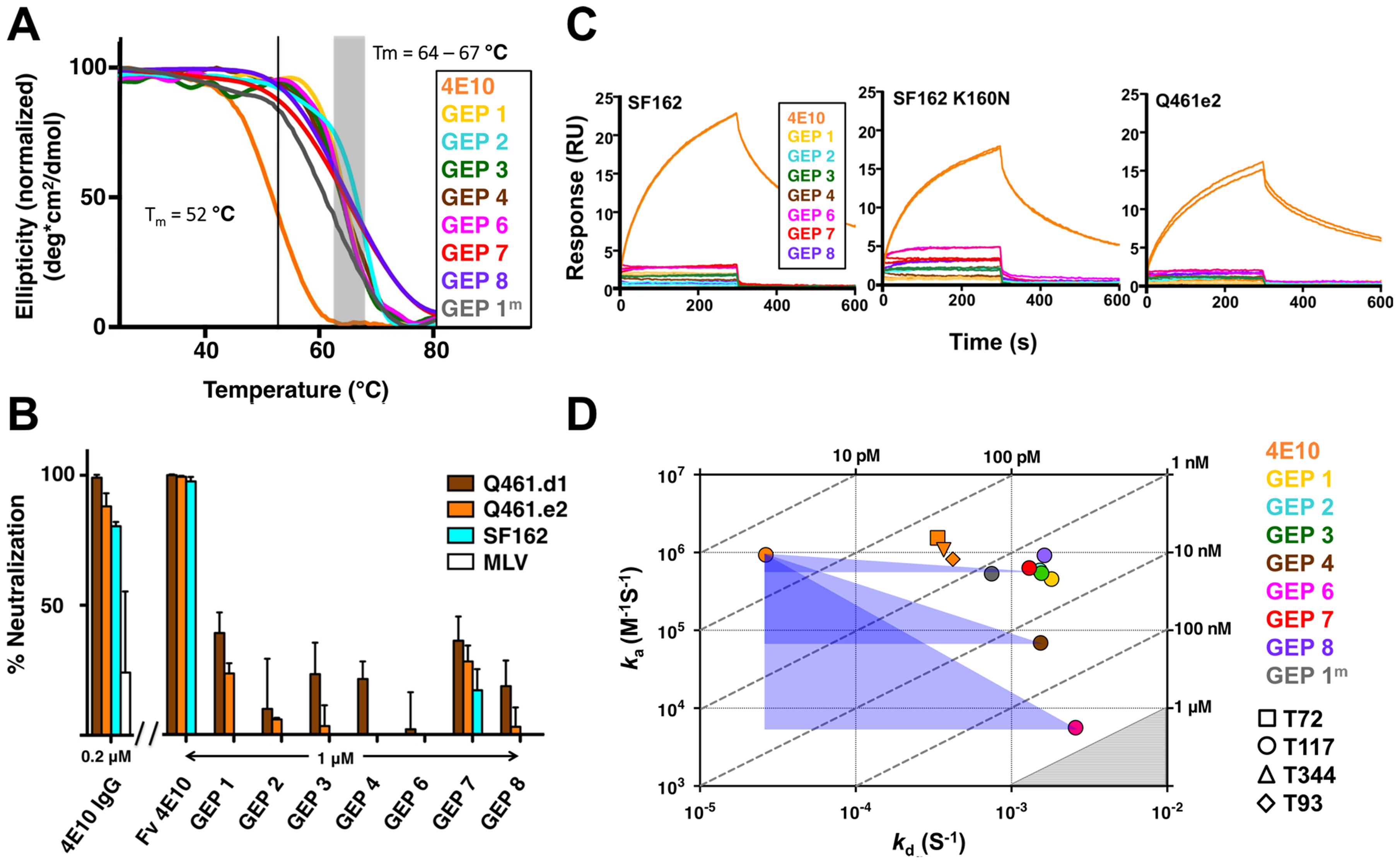 Biophysical and functional characterization of an ensemble of 4E10 GEPs.
