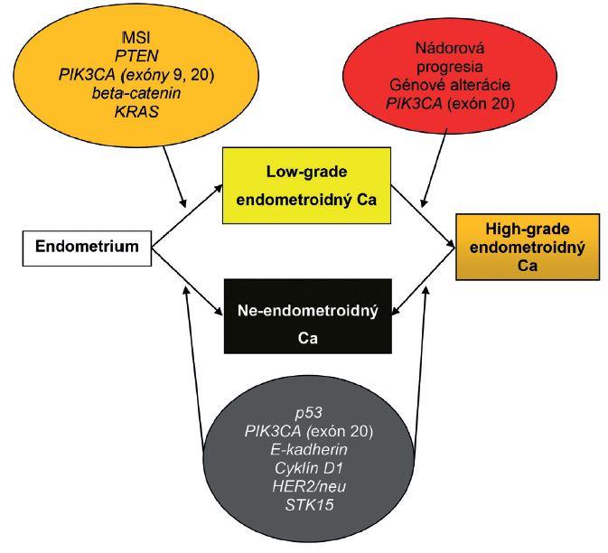 Patogenéza endometriálneho karcinómu: alternatíva duálneho modelu. Ca – karcinóm; MSI – mikrosatelitná instabilita. Spracované a upravené podľa Matias-Guiu et Prat (1).