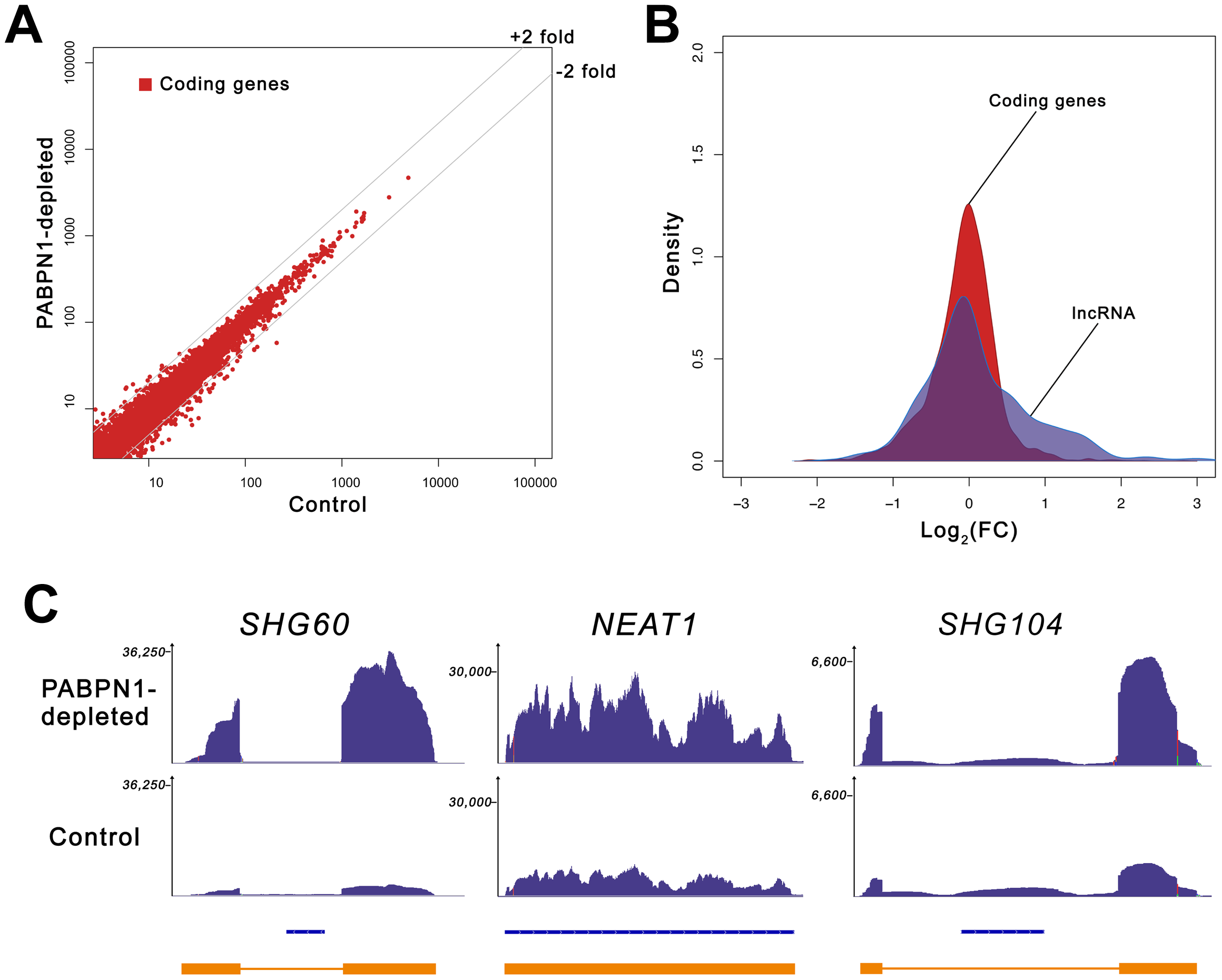 Loss of PABPN1 induces specific changes in gene expression.