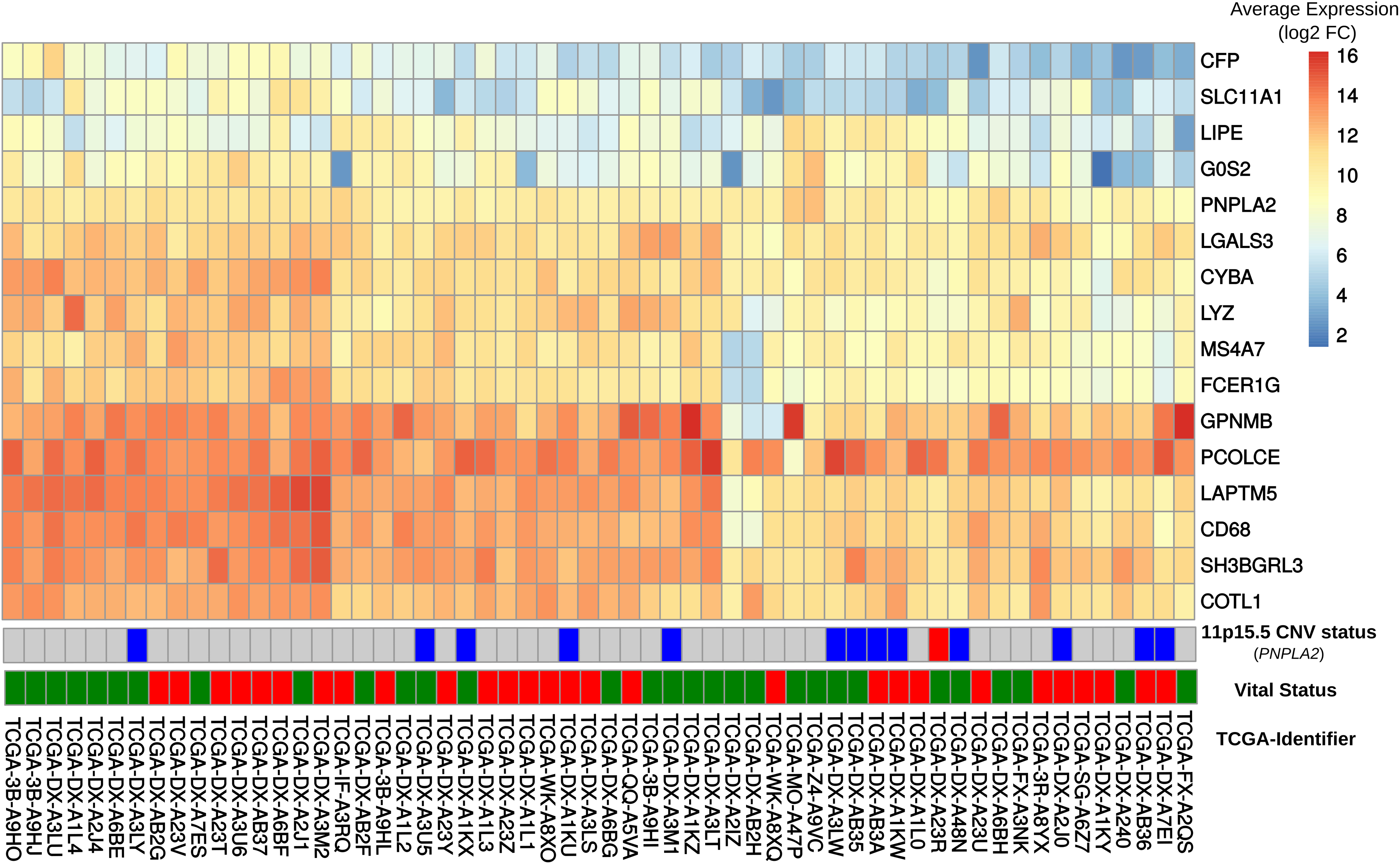 Comparison of gene expression in DAKO adipose tissue and in human dedifferentiated liposarcomas.