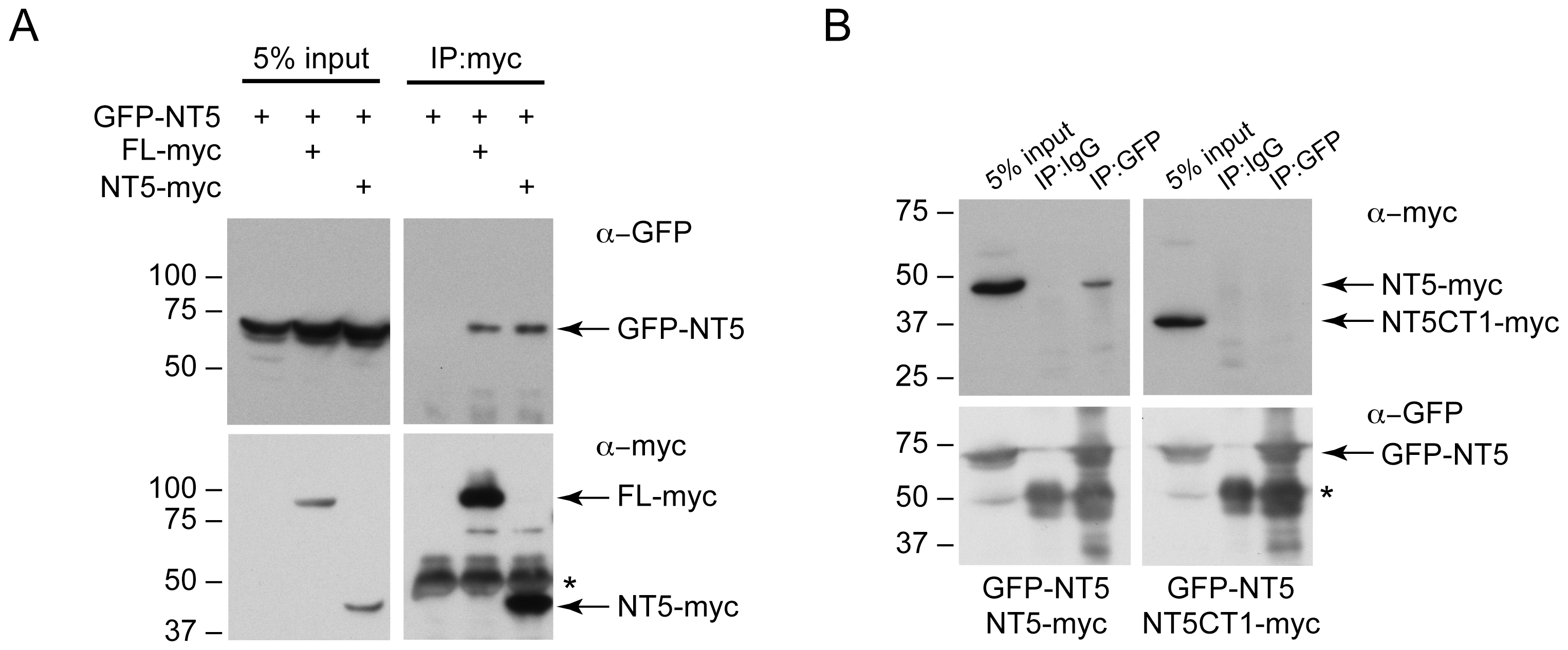 The C-terminus of DNAJC14 mediates self-interaction.