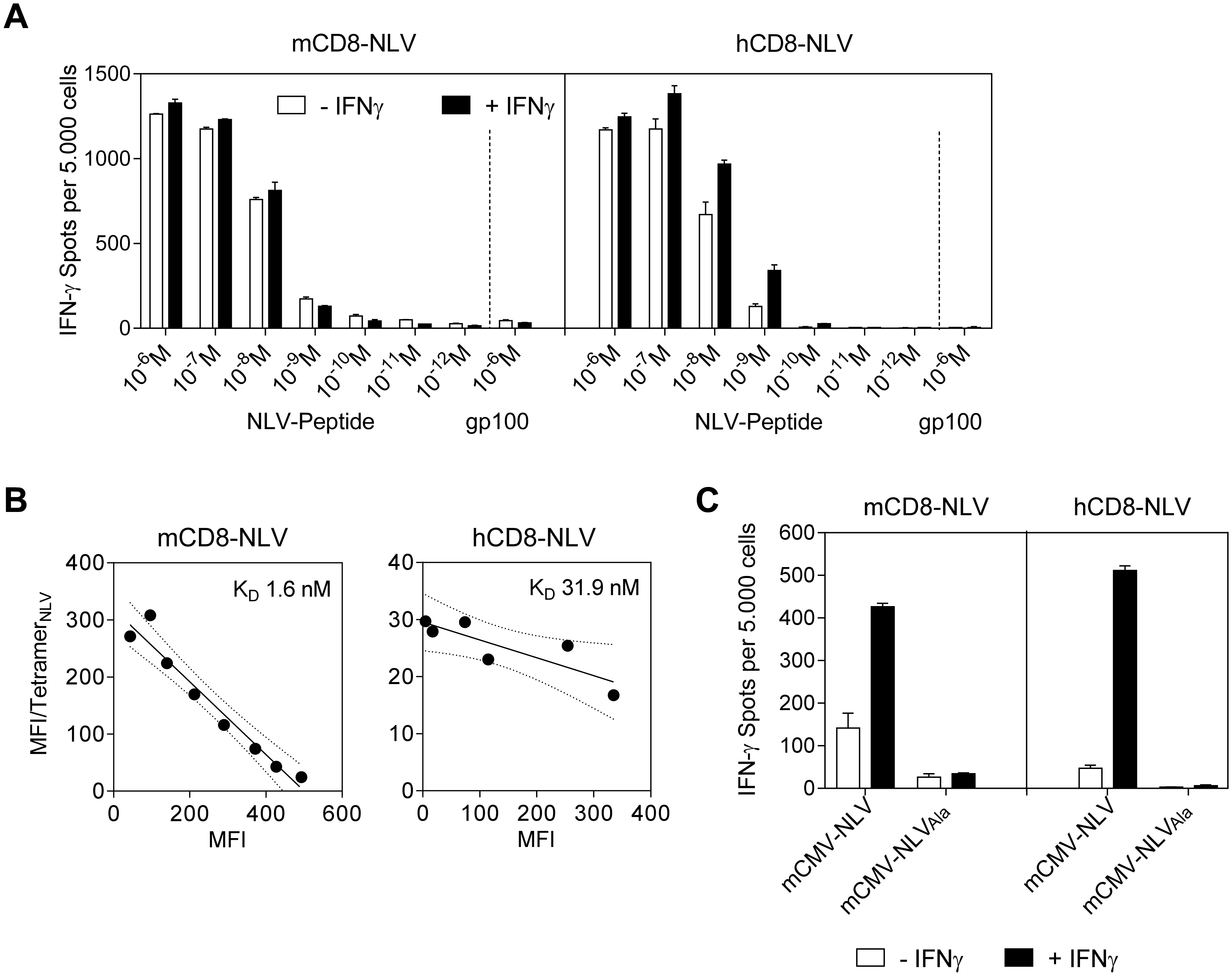 Epitope recognition by NLV peptide specific CD8 T cells.