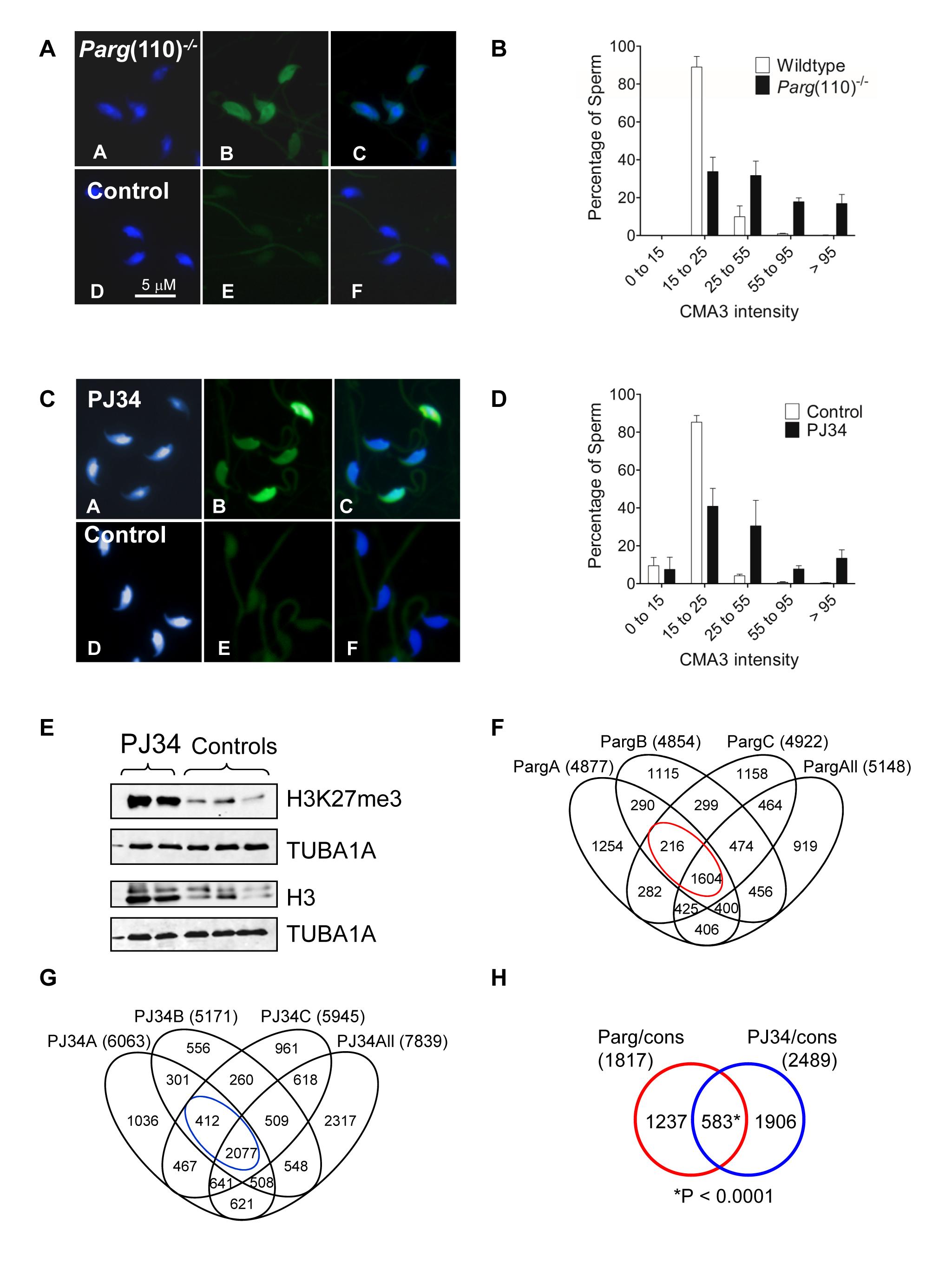 Aberrant chromatin composition in mouse models of altered PAR metabolism.